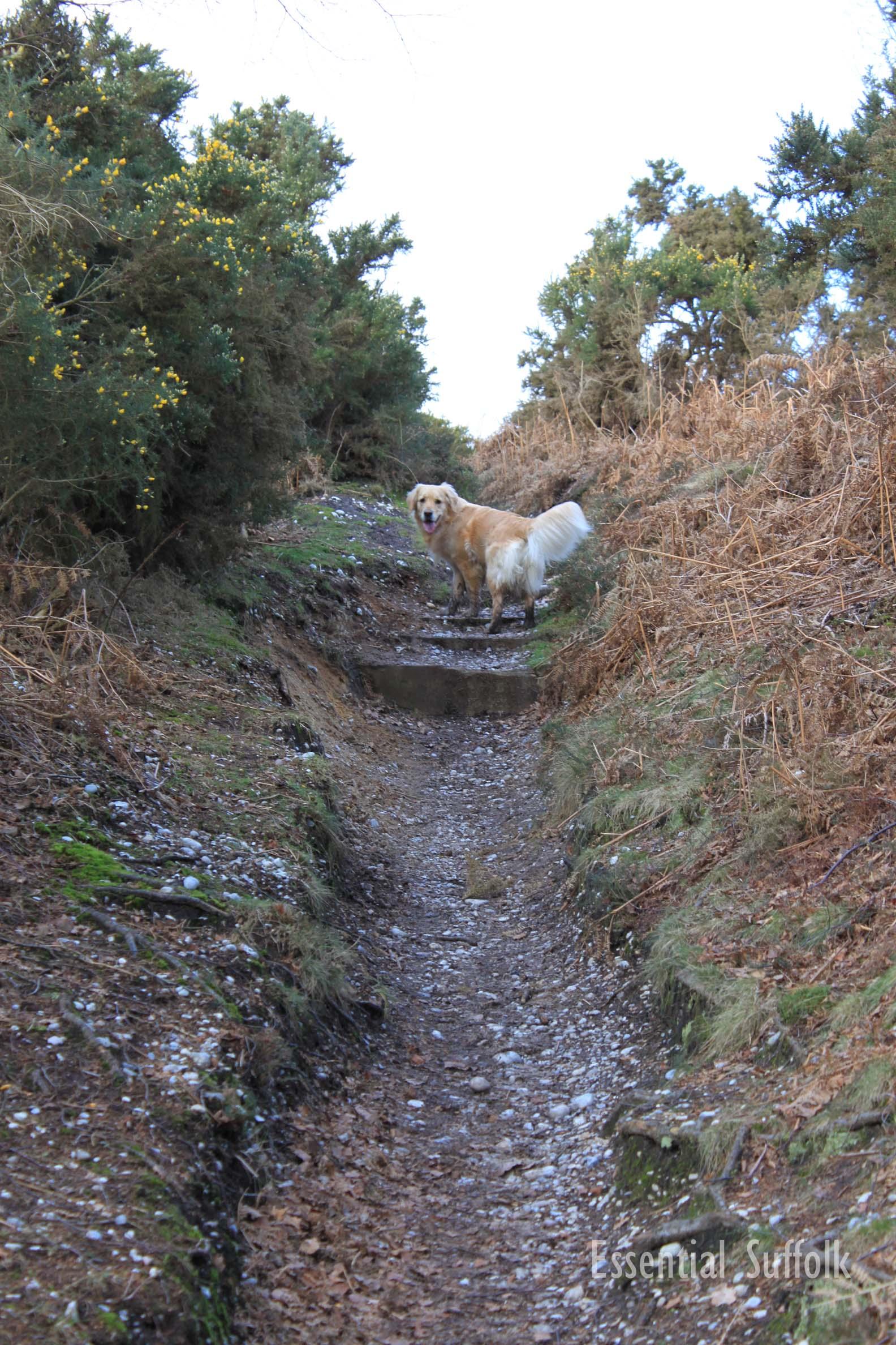 Westleton Dog Walk 1 17.jpg