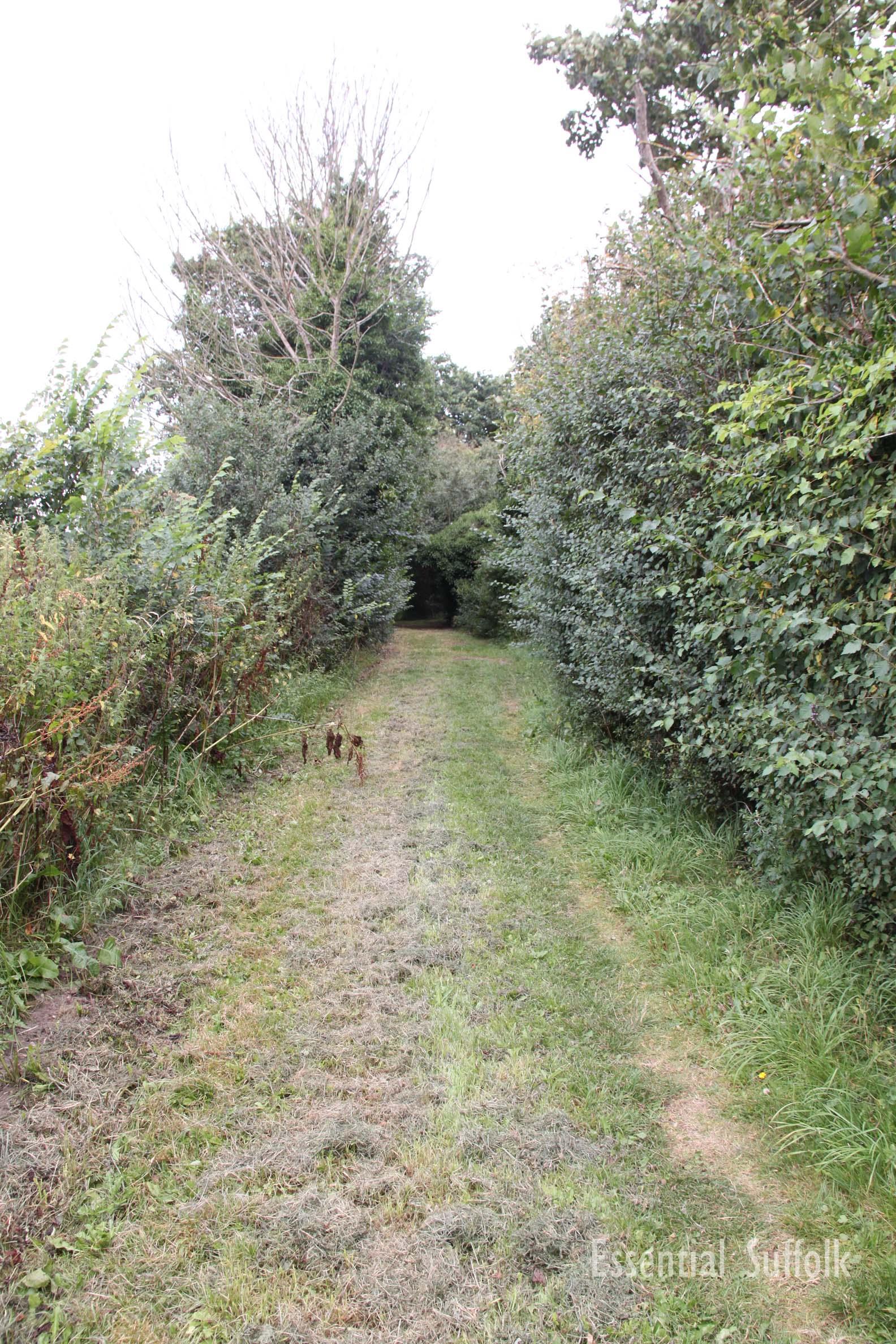 Westleton Dog Walk 2  01.jpg