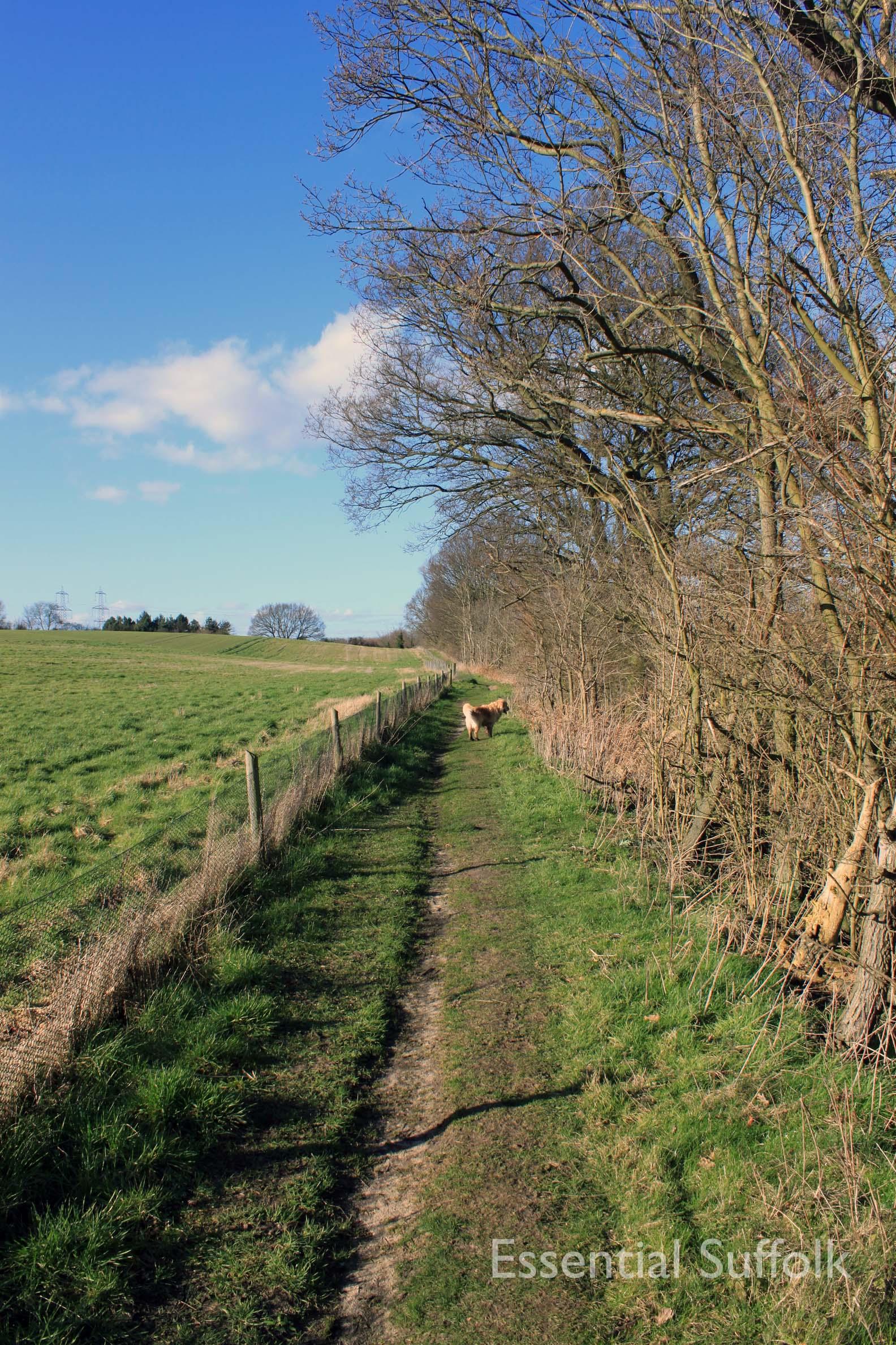 Westerfield Route 2 12.jpg