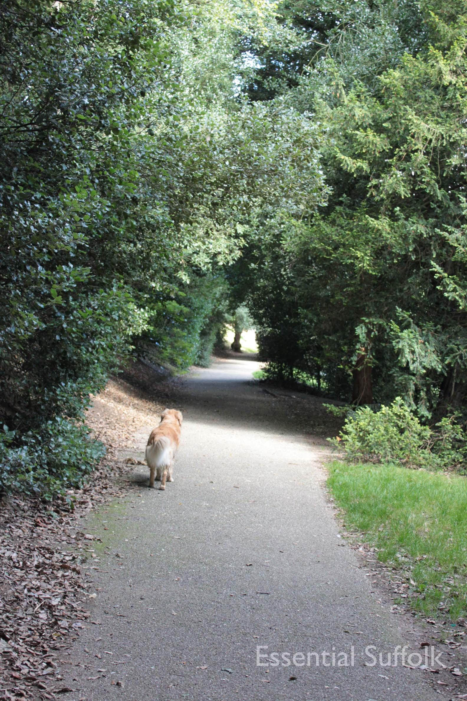 Christchurch Park 008.jpg