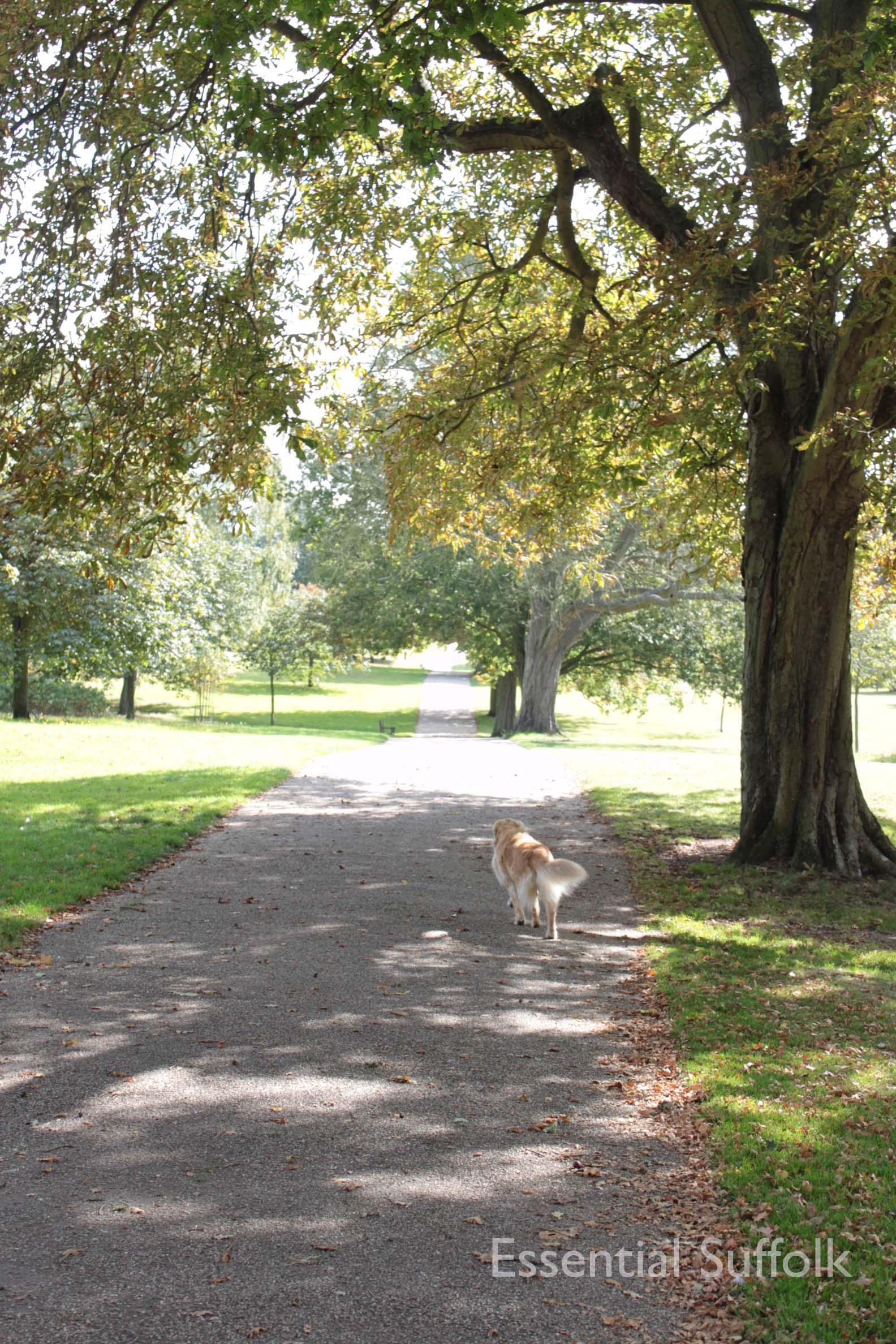 Christchurch Park 010.jpg