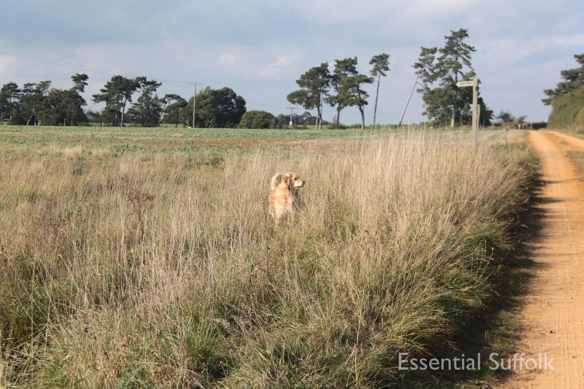 Ramsholt Dog Walk005.jpg