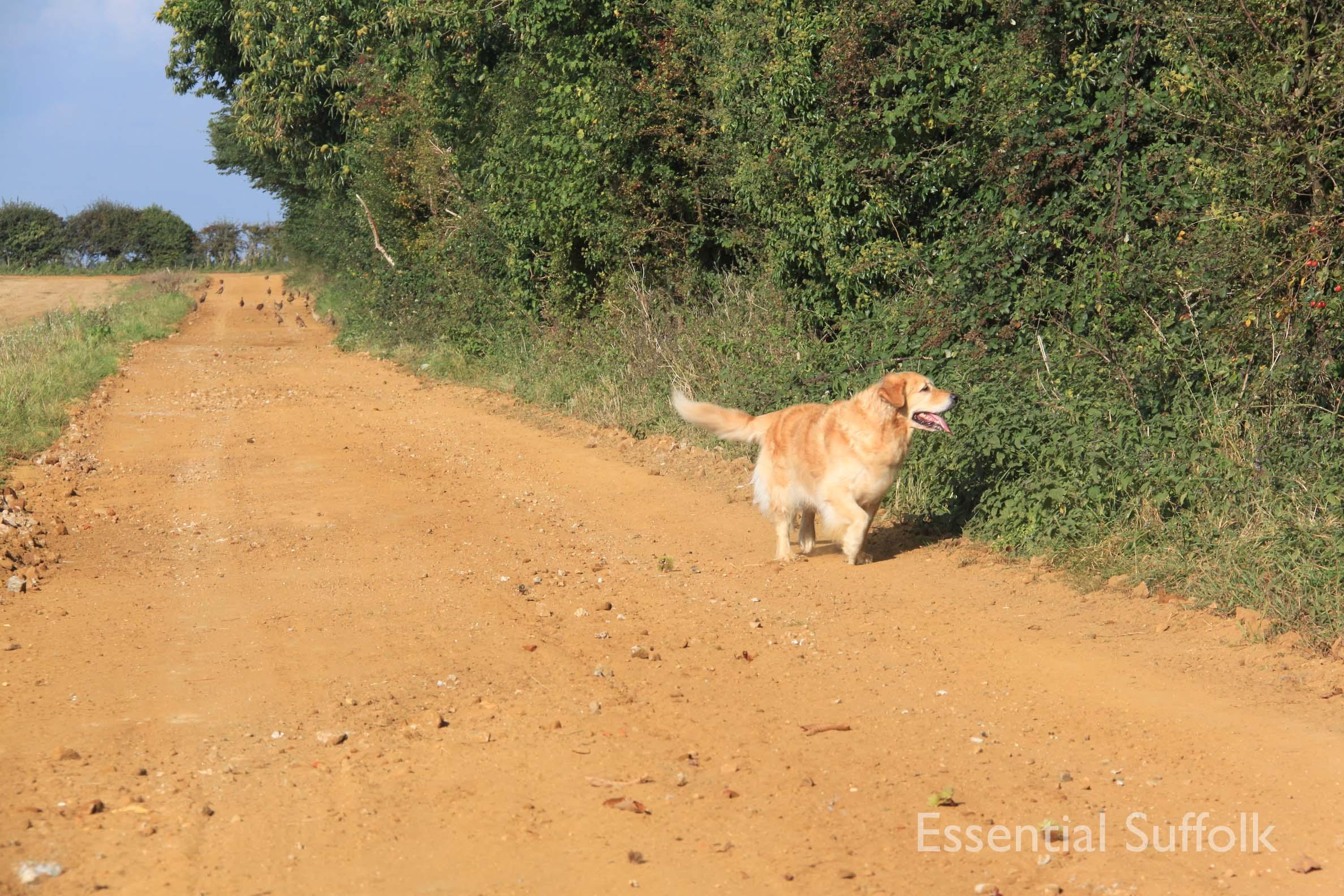 Ramsholt Dog Walk010.jpg