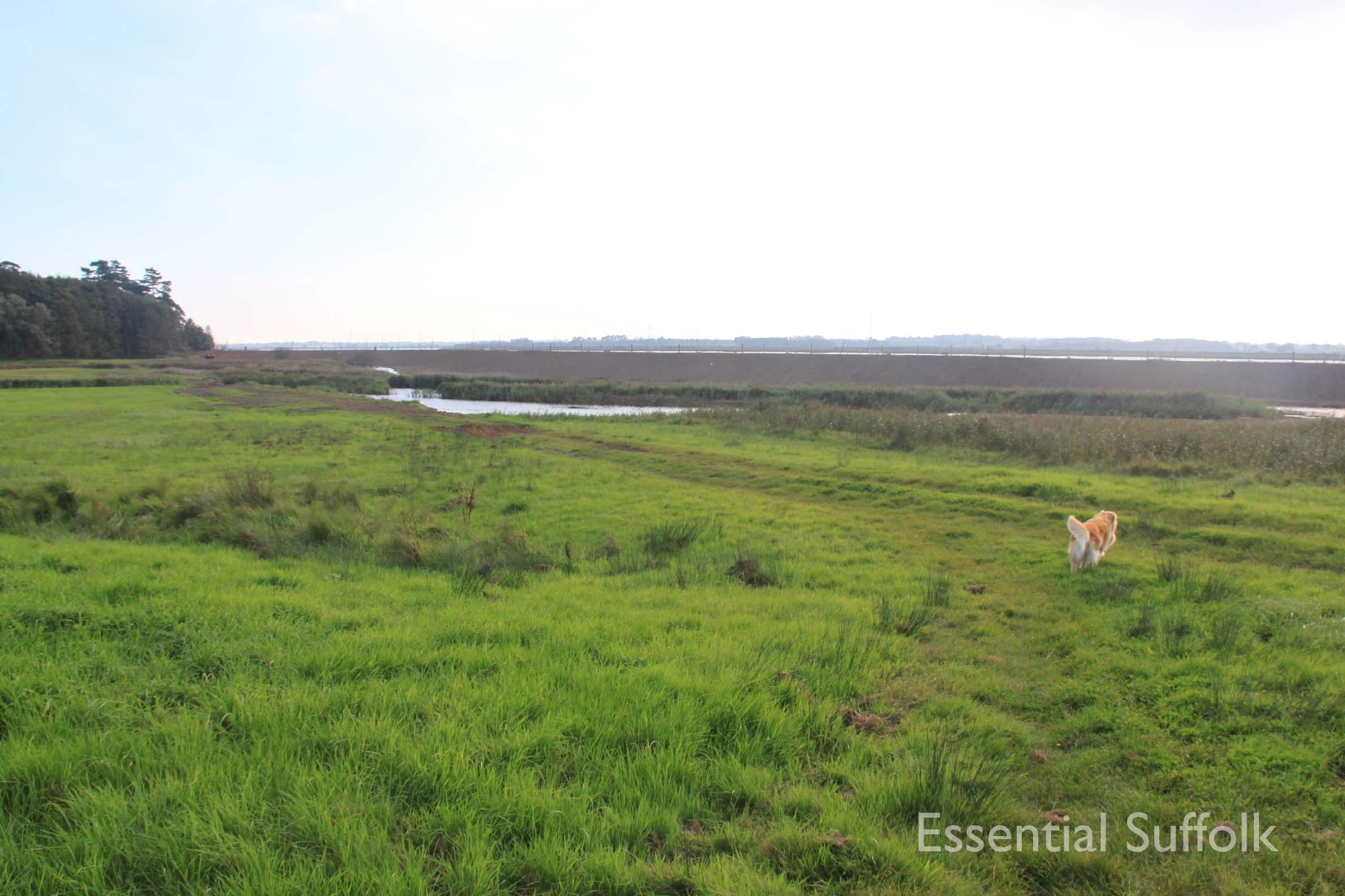 Ramsholt Dog Walk020.jpg
