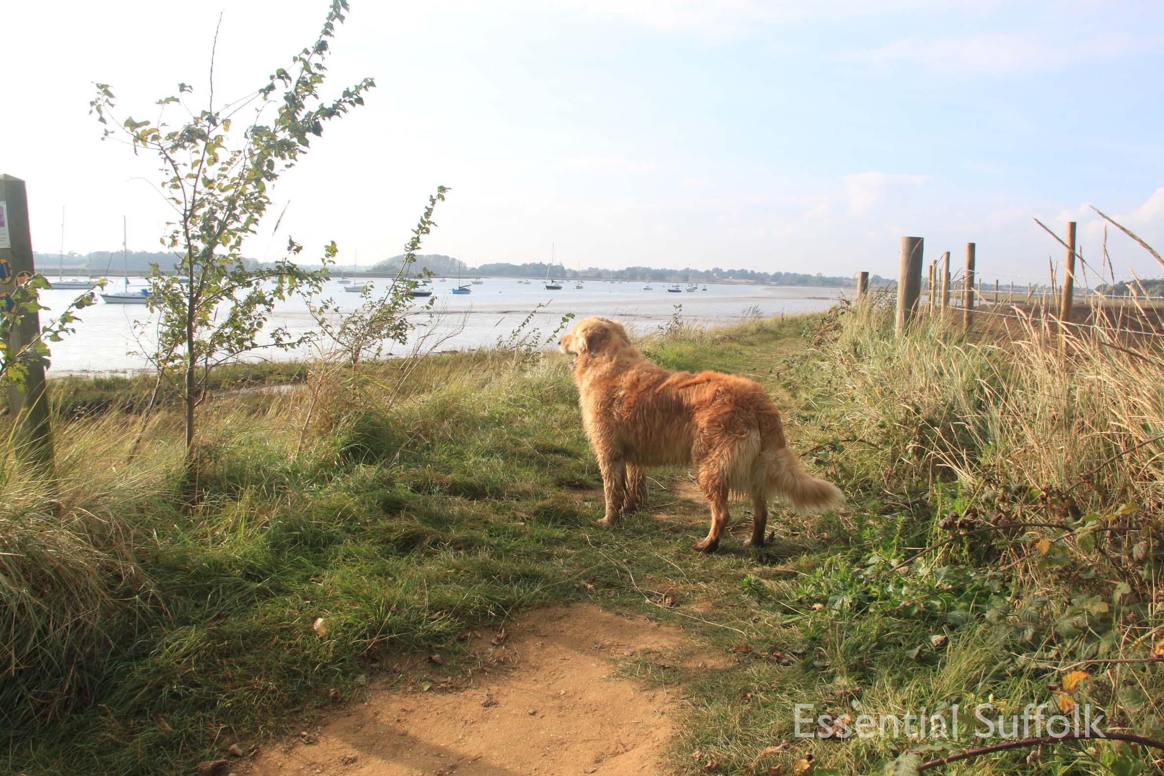 Ramsholt Dog Walk024.jpg