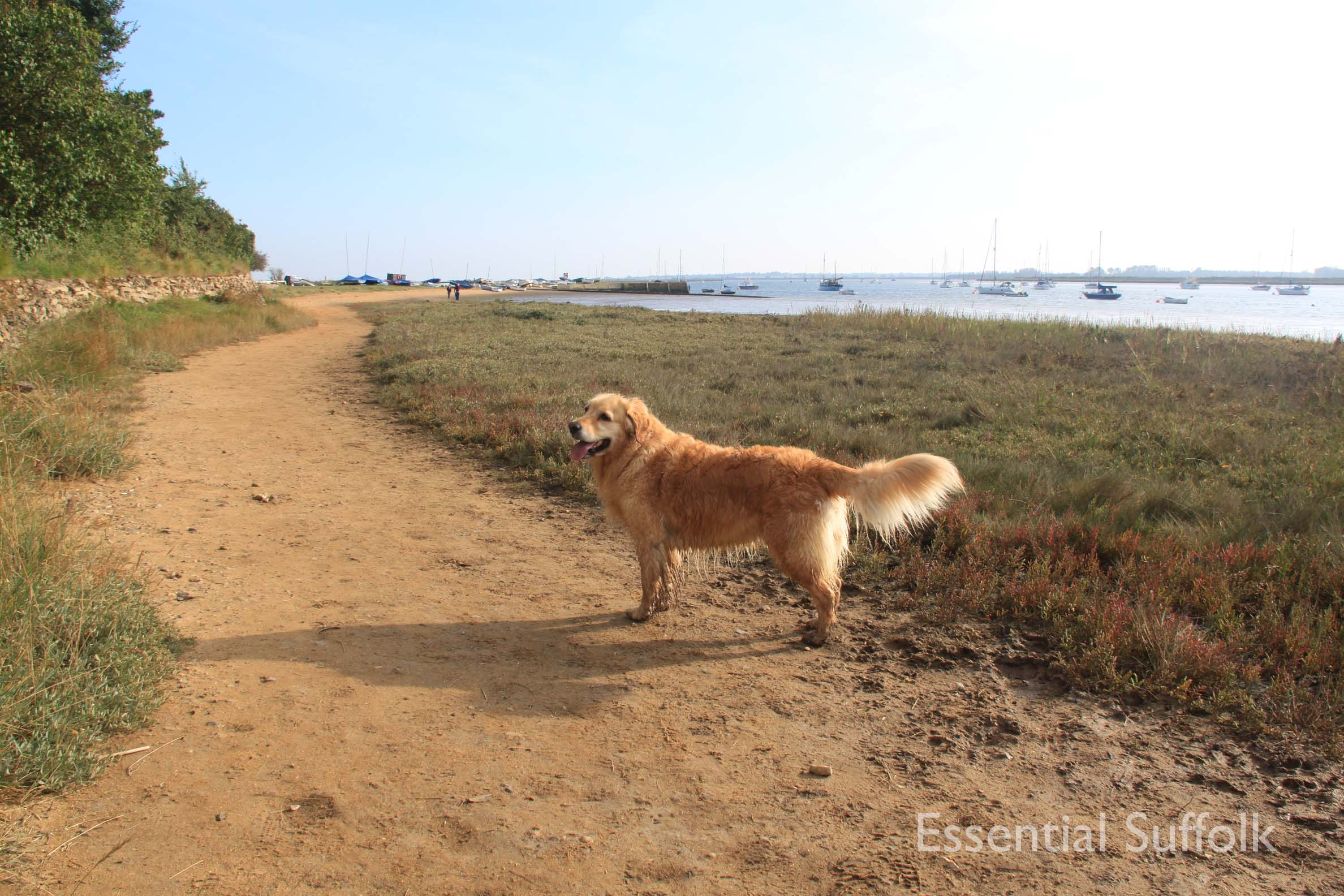 Ramsholt Dog Walk025.jpg