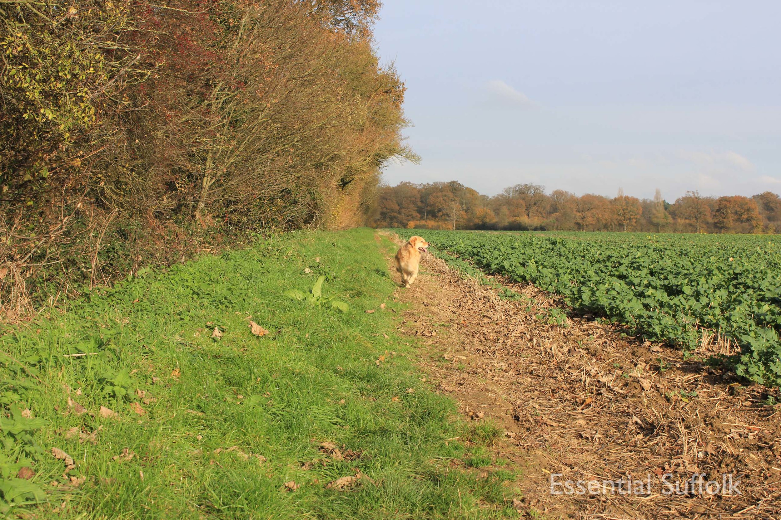 Easton Dog Walk 002.jpg