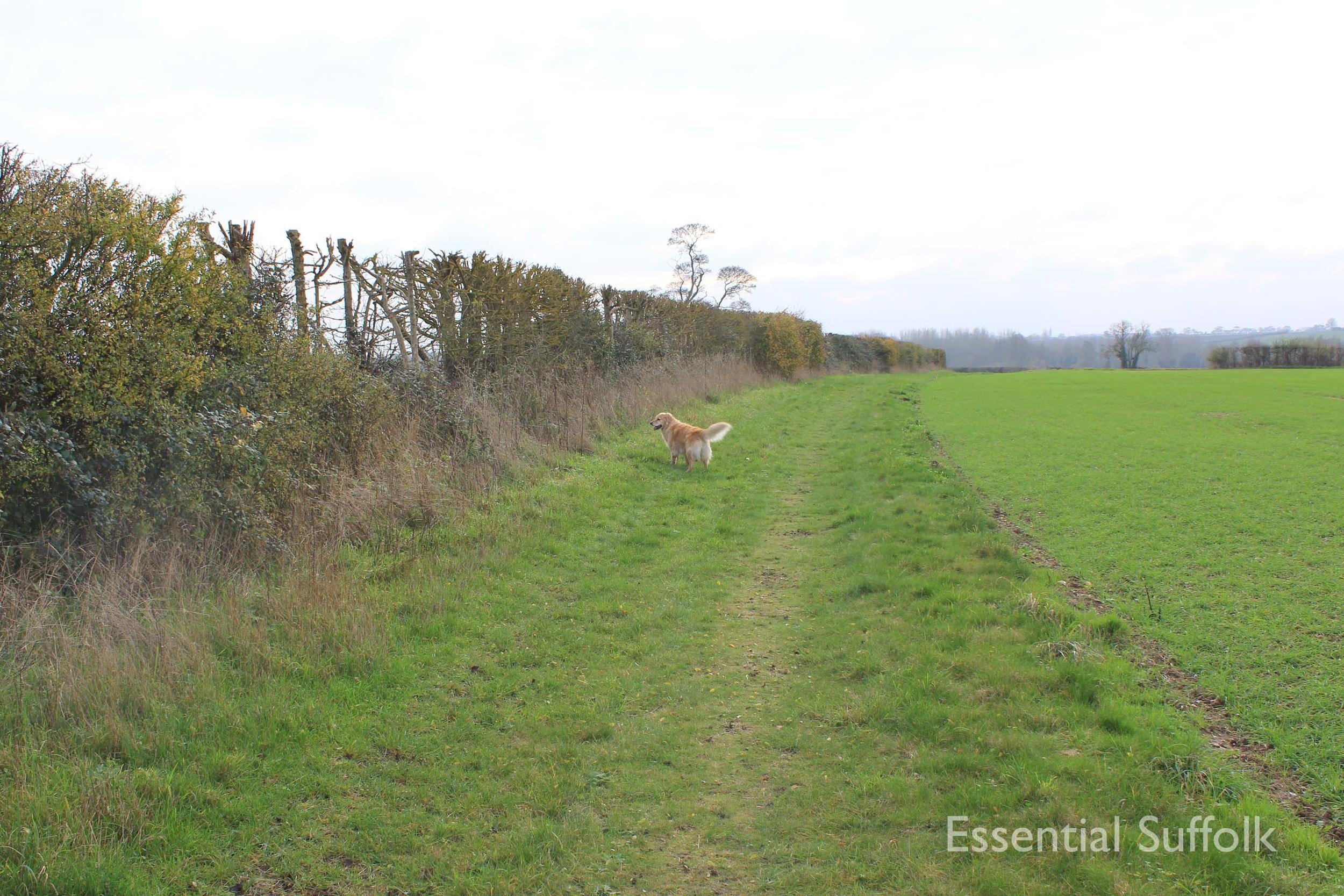 Easton Dog Walk 011.jpg