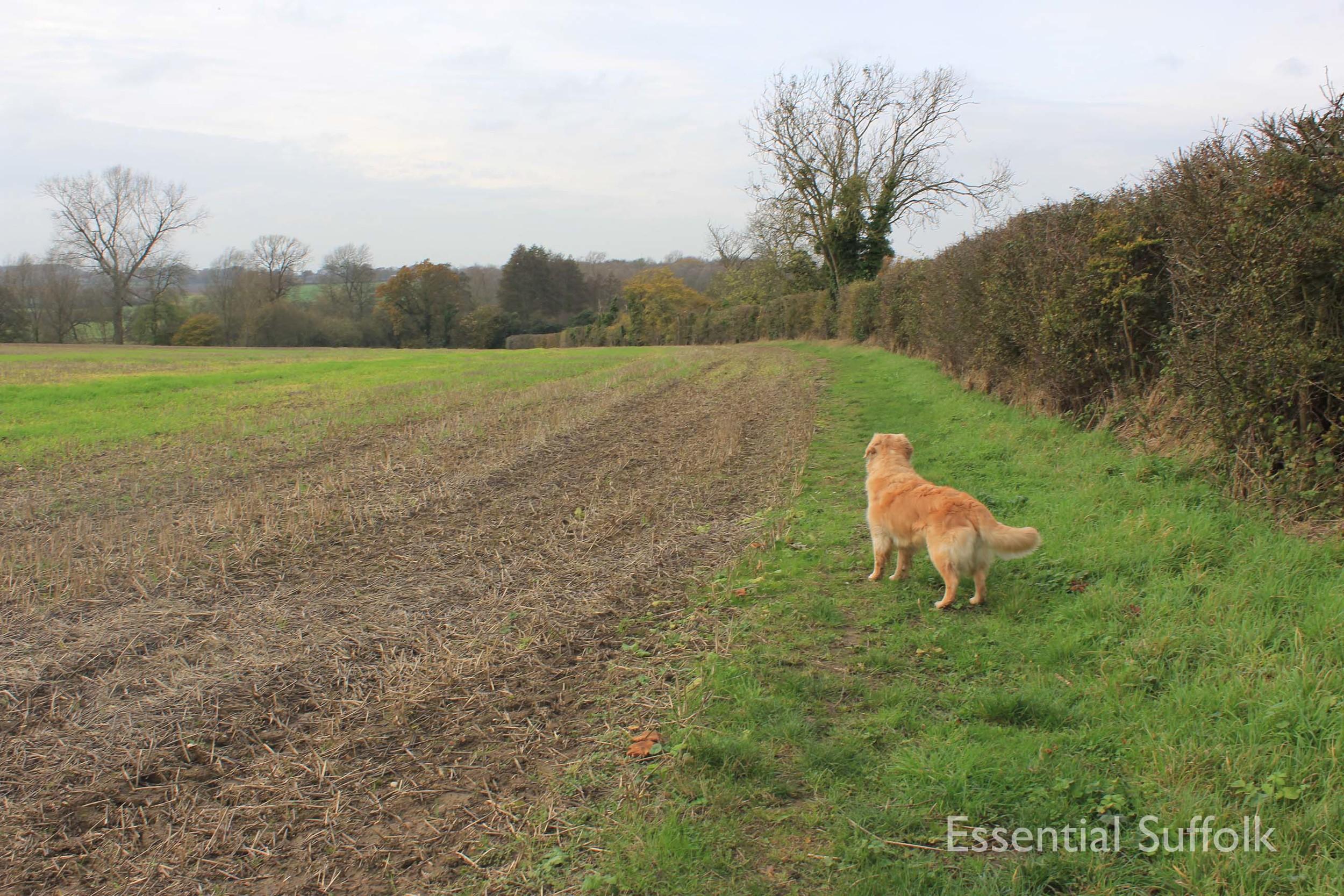 Easton Dog Walk 012.jpg