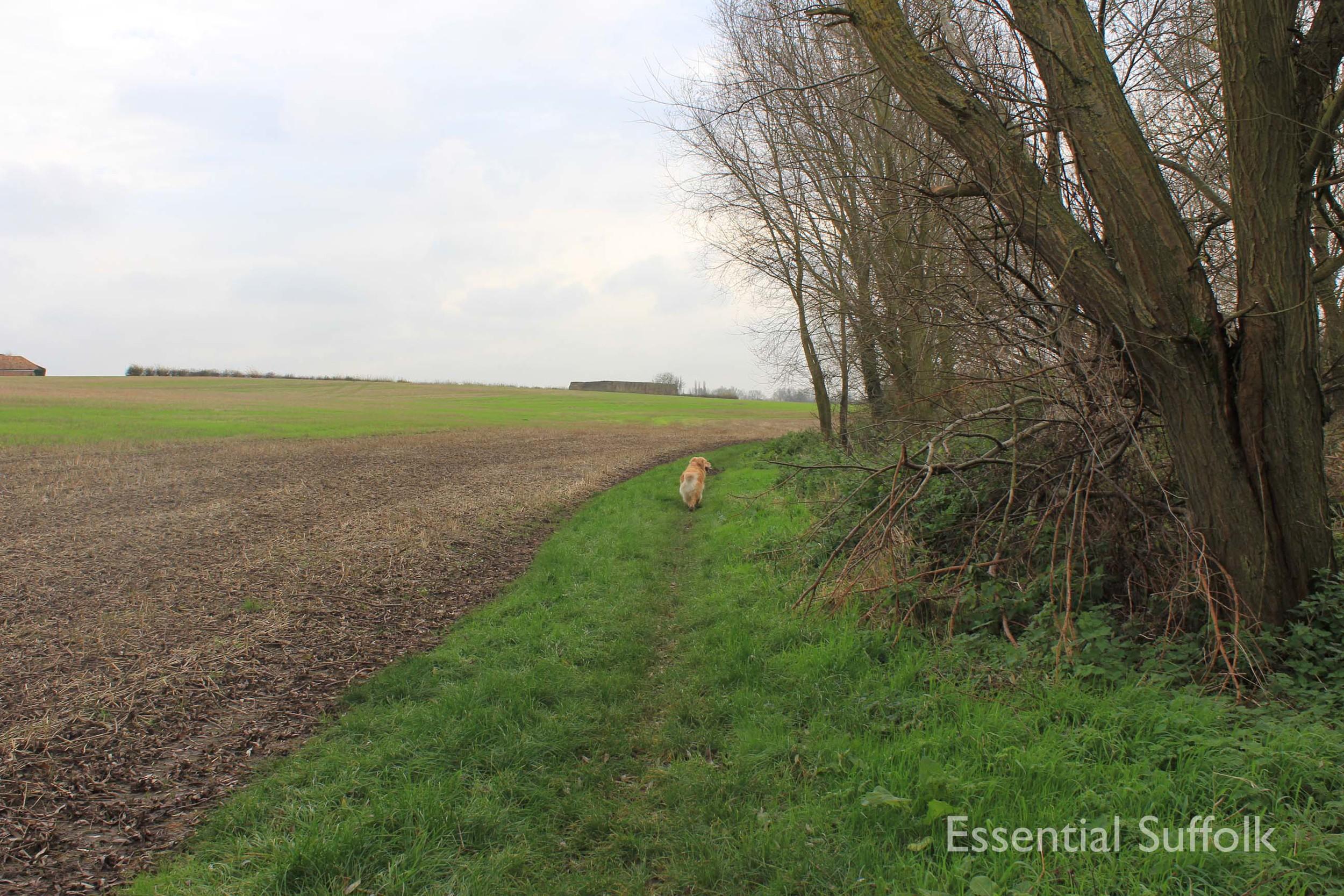 Easton Dog Walk 013.jpg