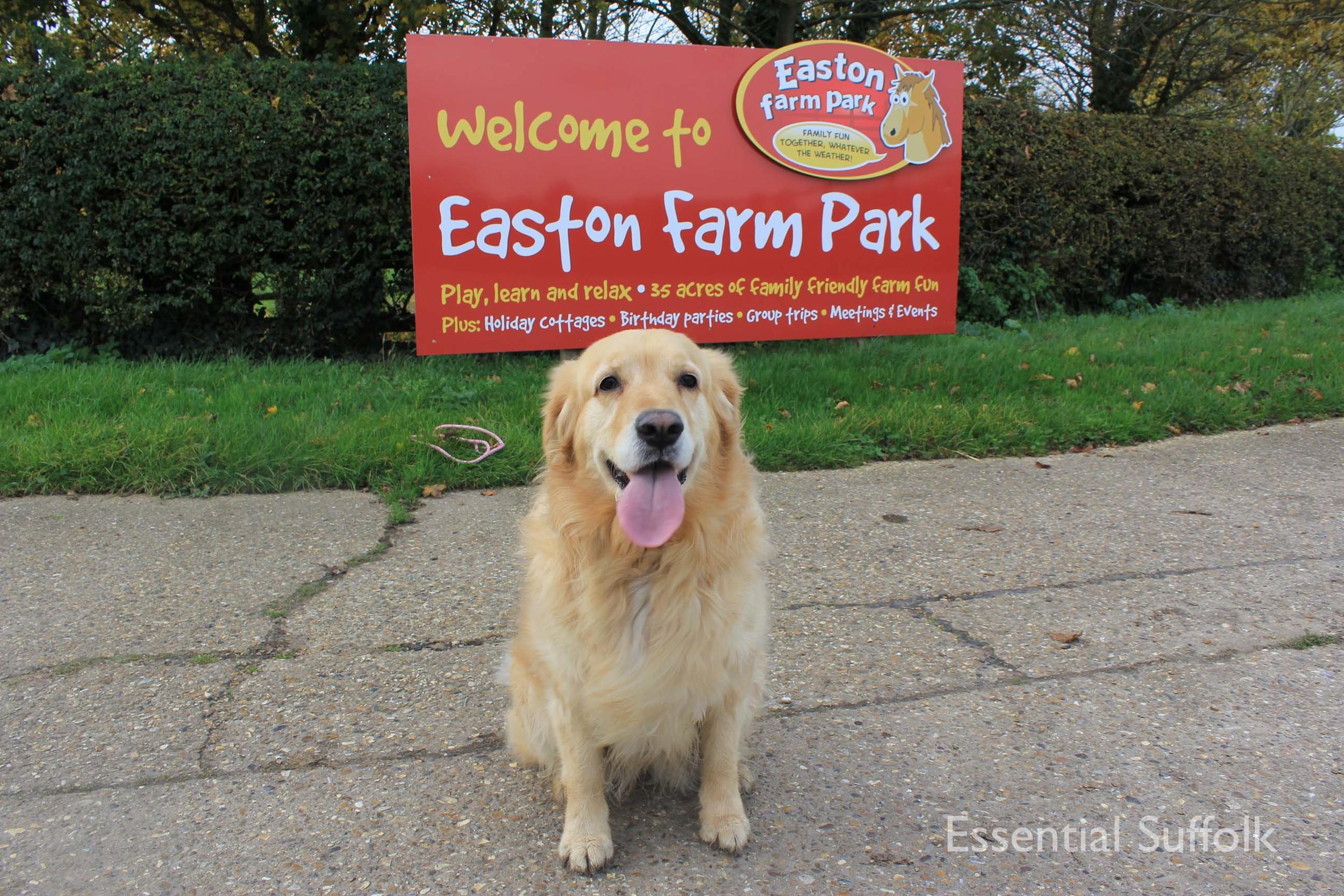 Easton Dog Walk 015.jpg
