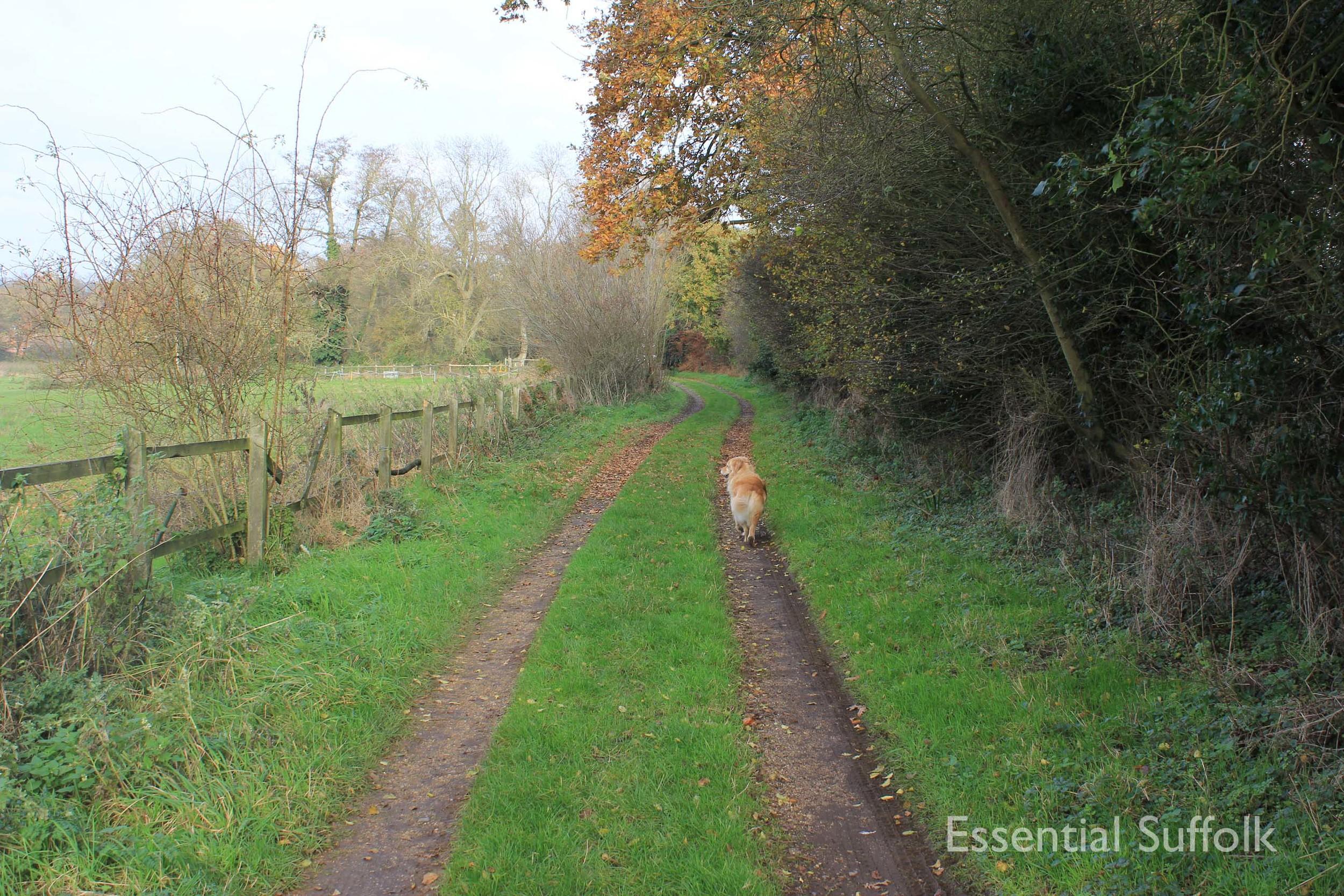Easton Dog Walk 016.jpg