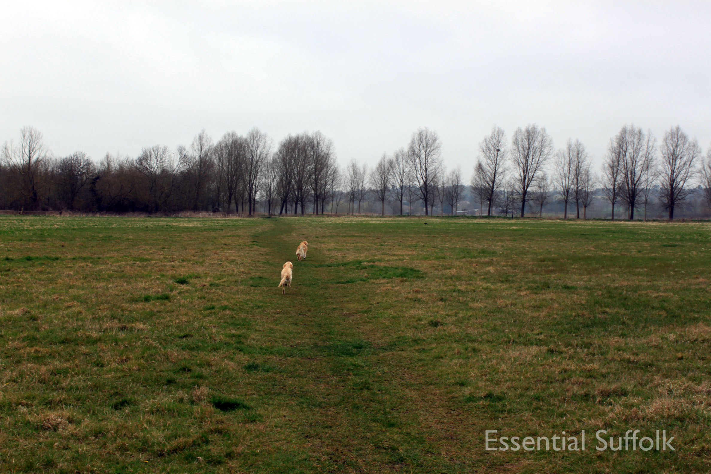 Stratford  Swan Dog Walk 01.jpg