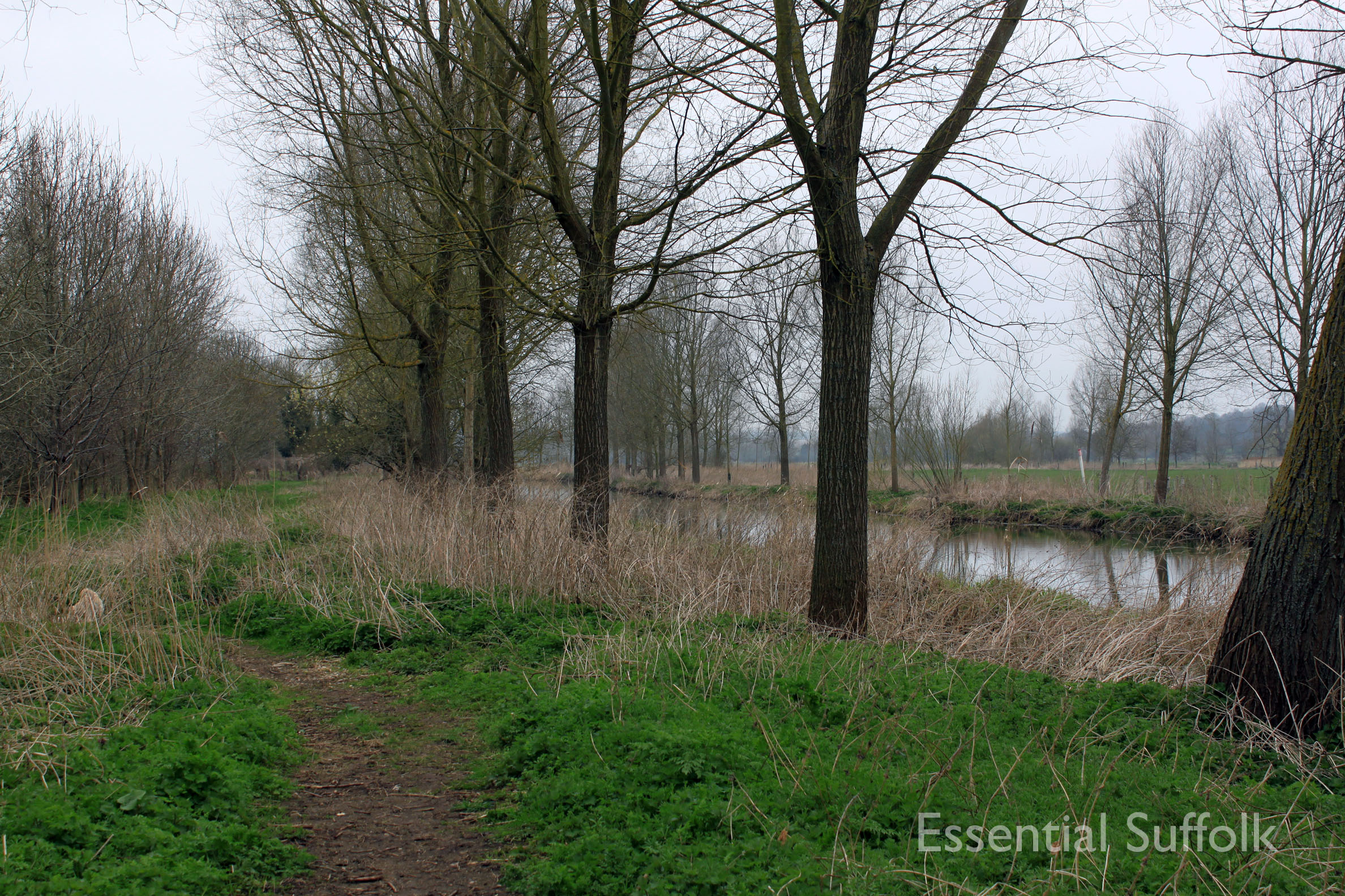 Stratford  Swan Dog Walk 03.jpg