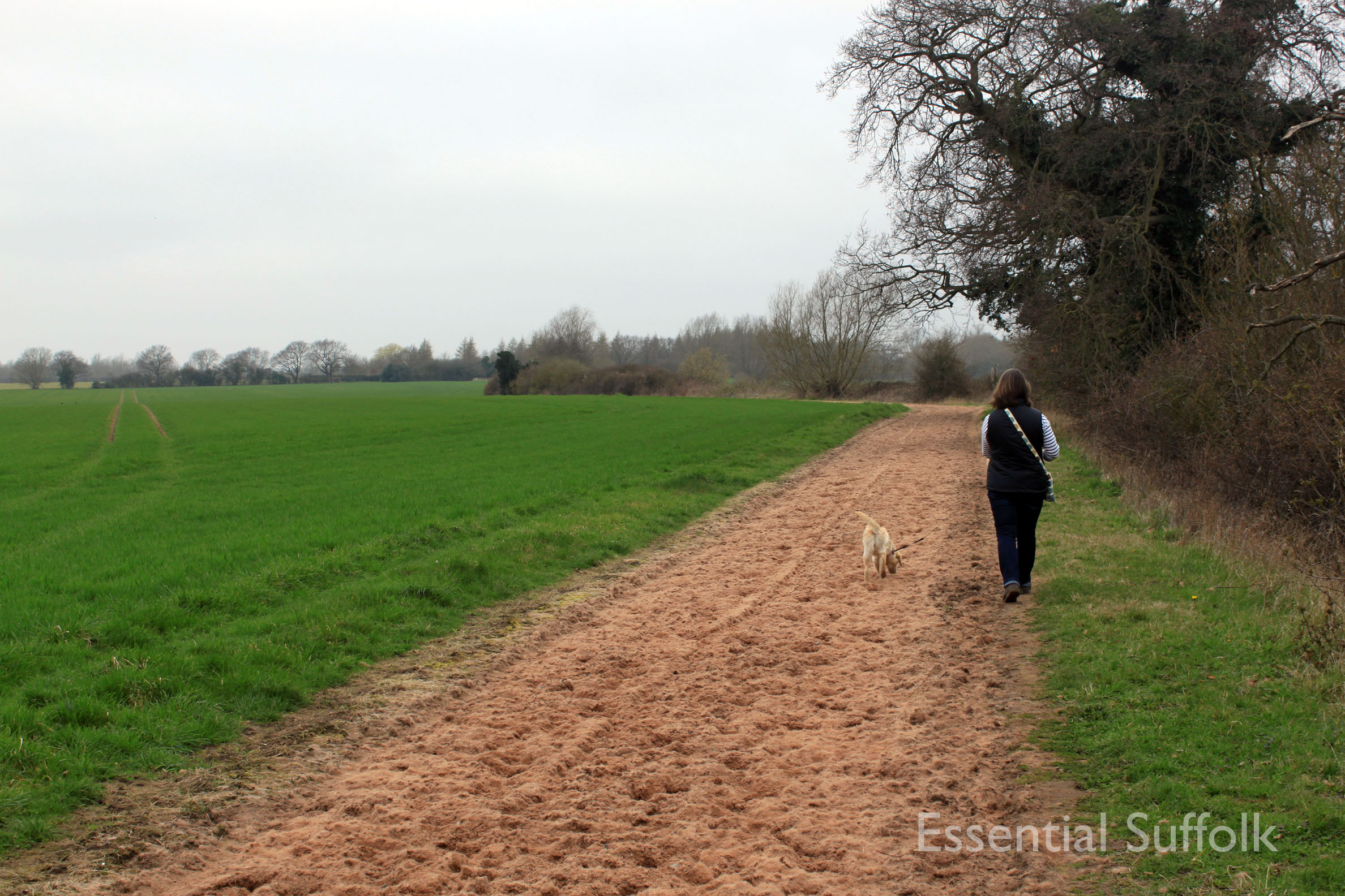 Stratford  Swan Dog Walk 04.jpg
