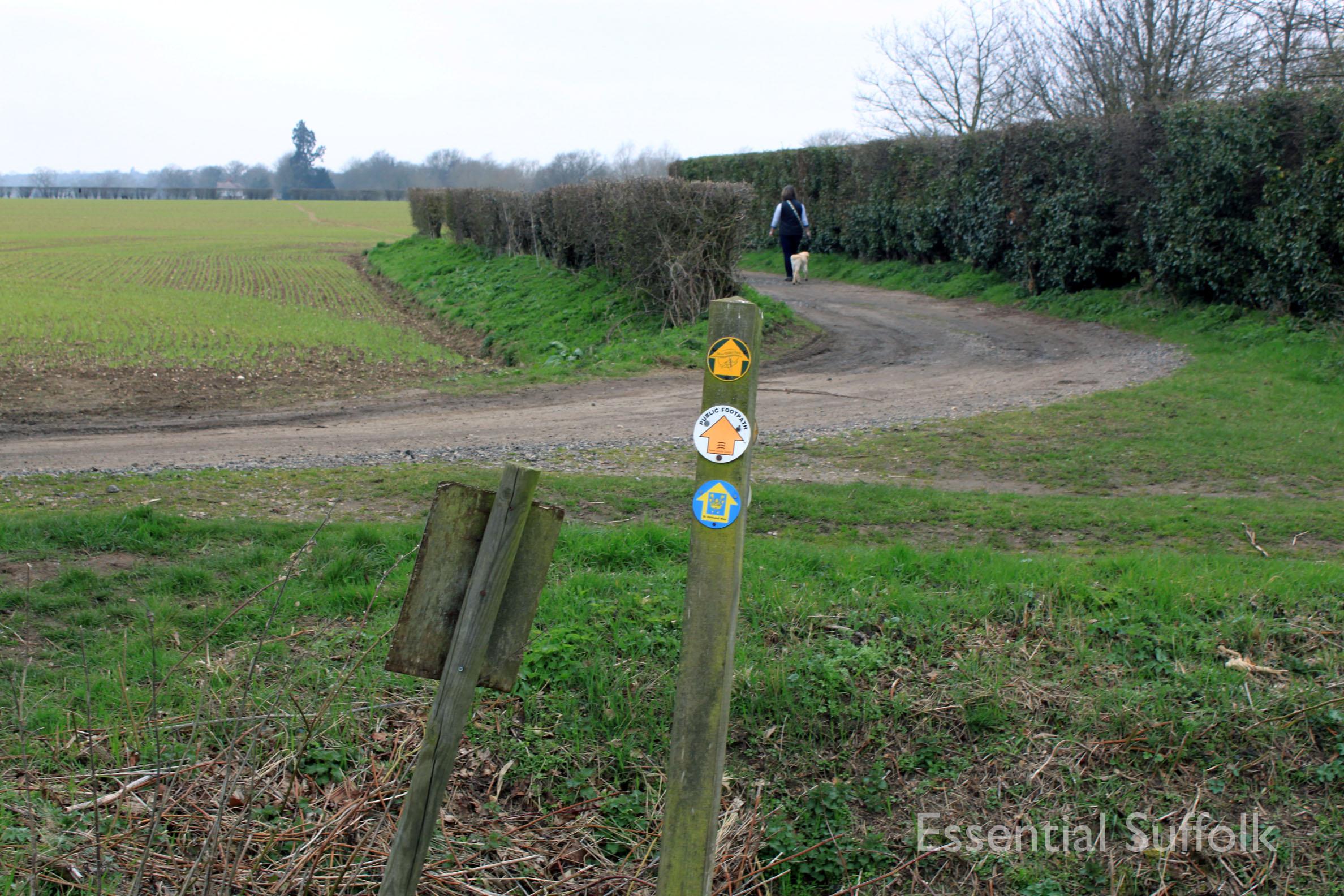 Stratford  Swan Dog Walk 09.jpg