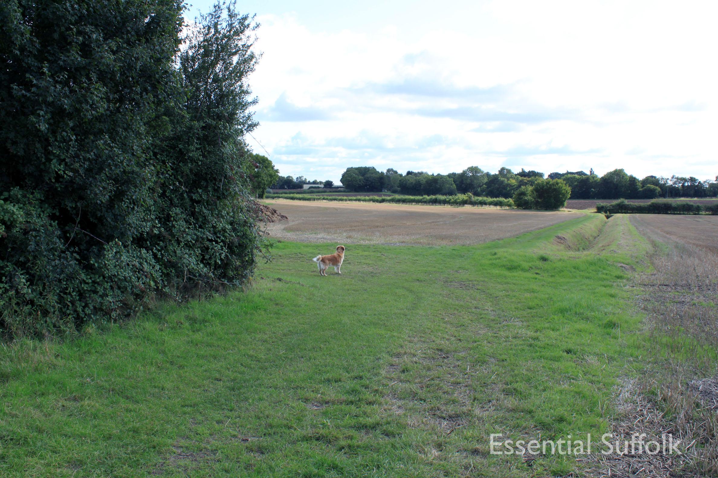 Shepherd and Dog 001.jpg