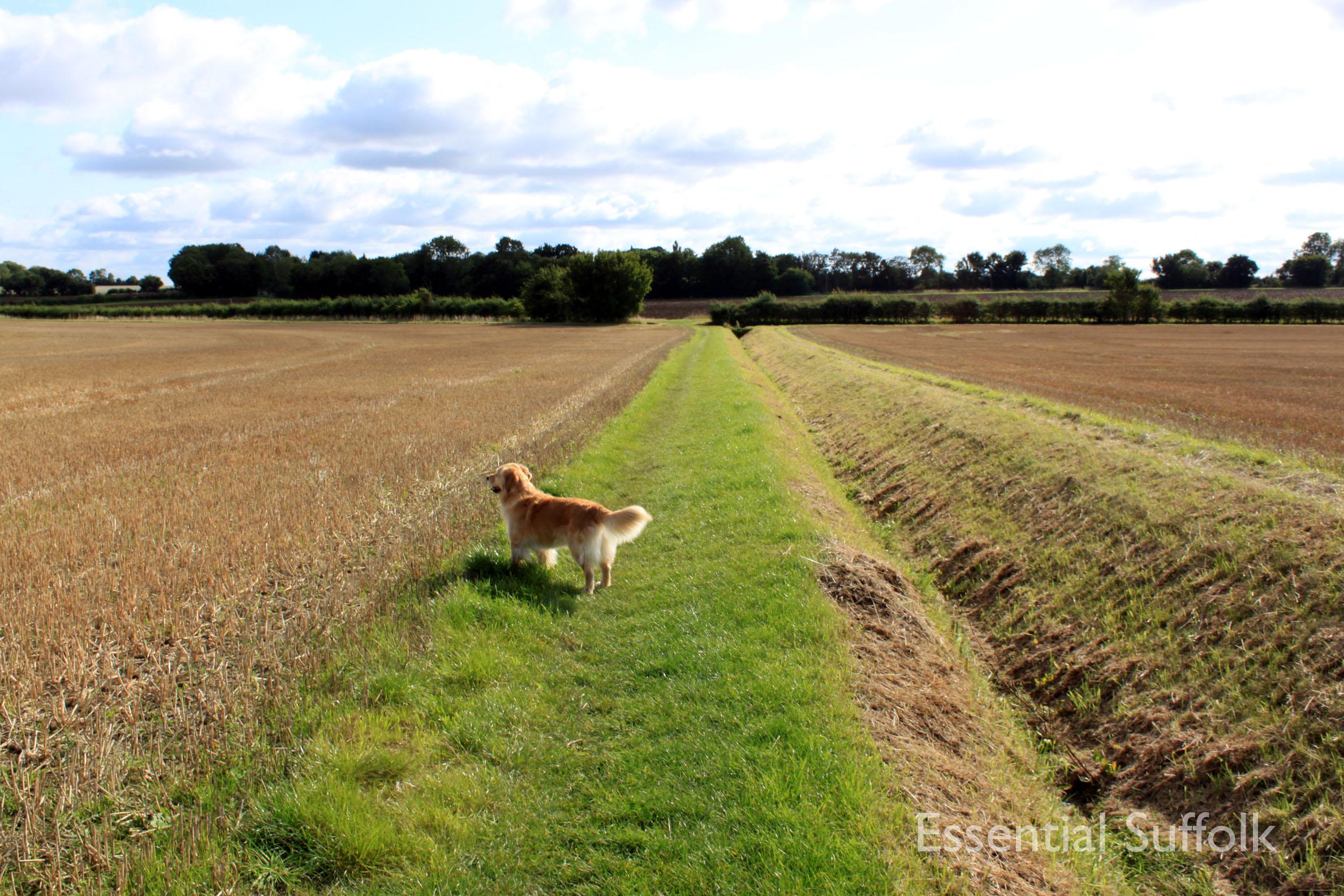 Shepherd and Dog 002.jpg