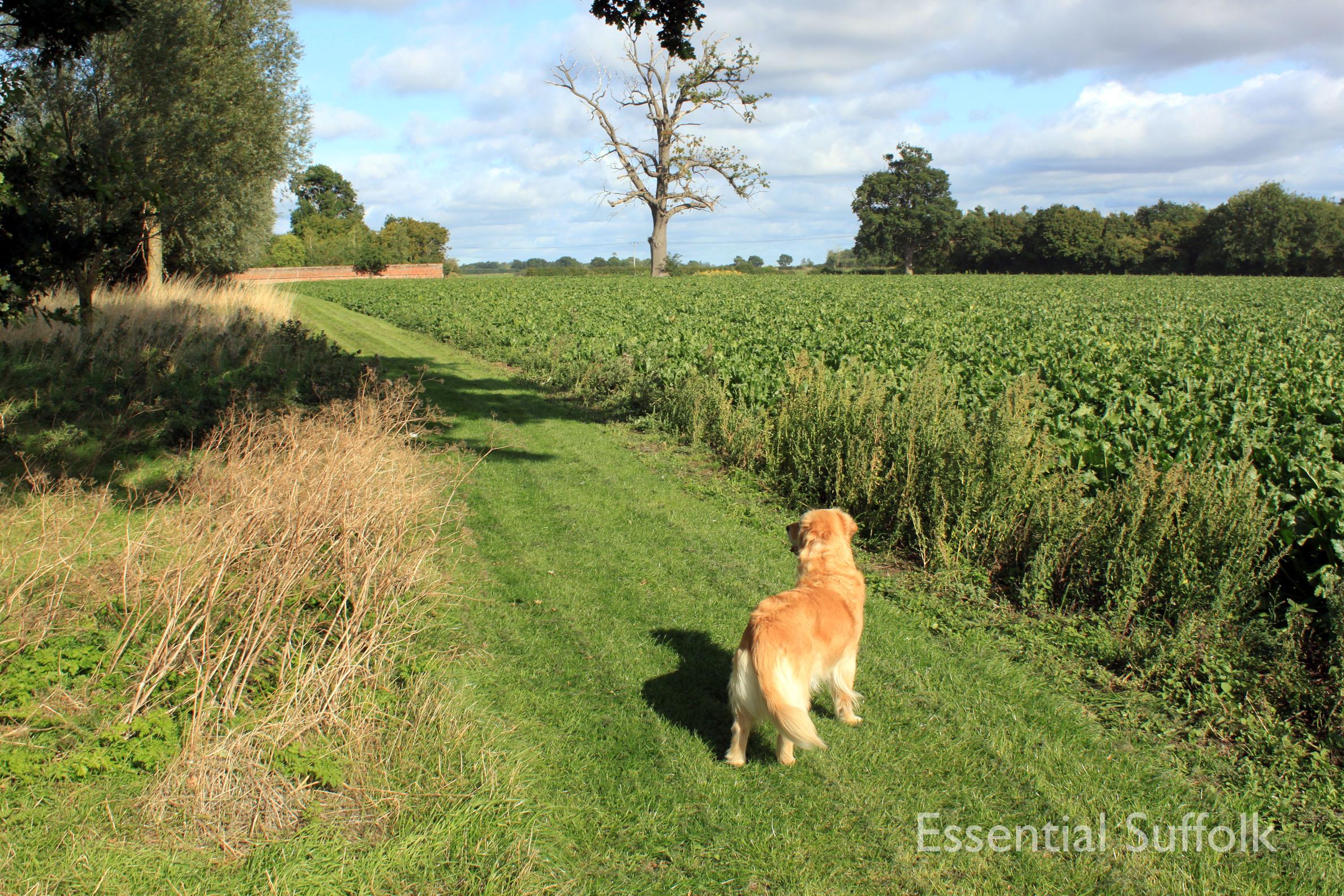 Shepherd and Dog 011.jpg
