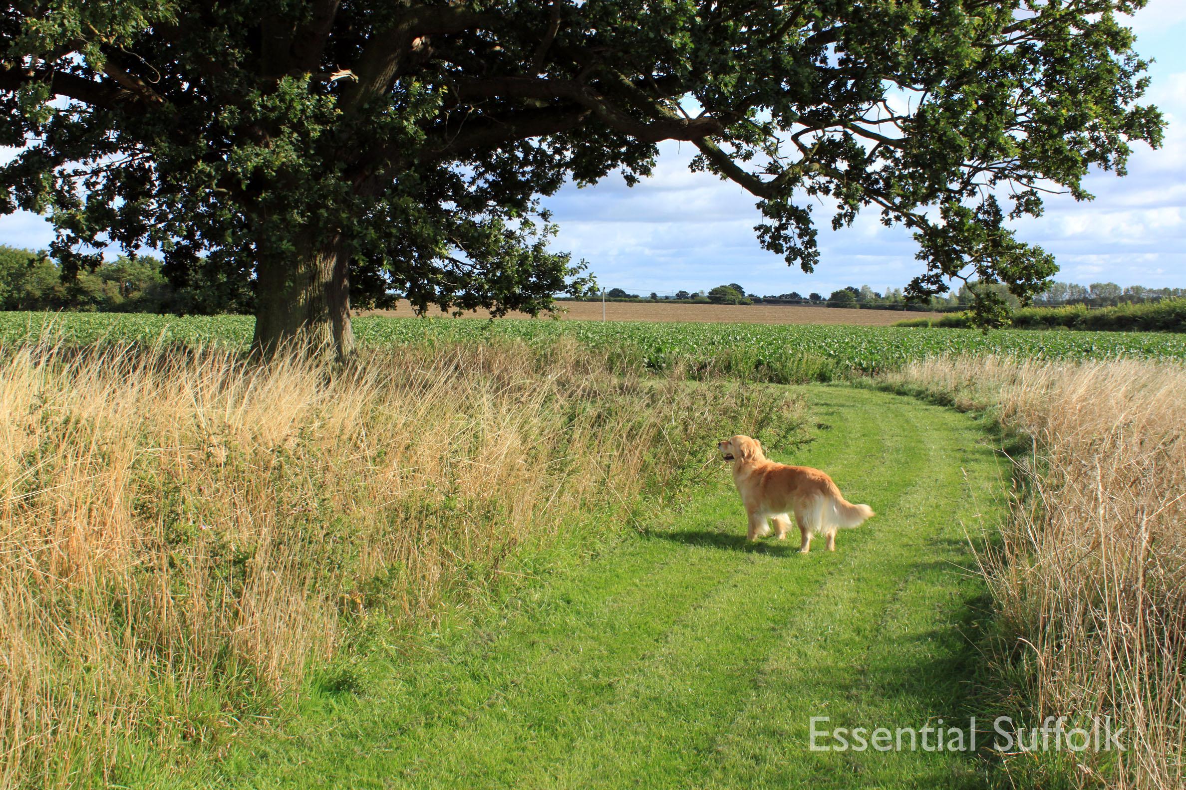 Shepherd and Dog 010.jpg