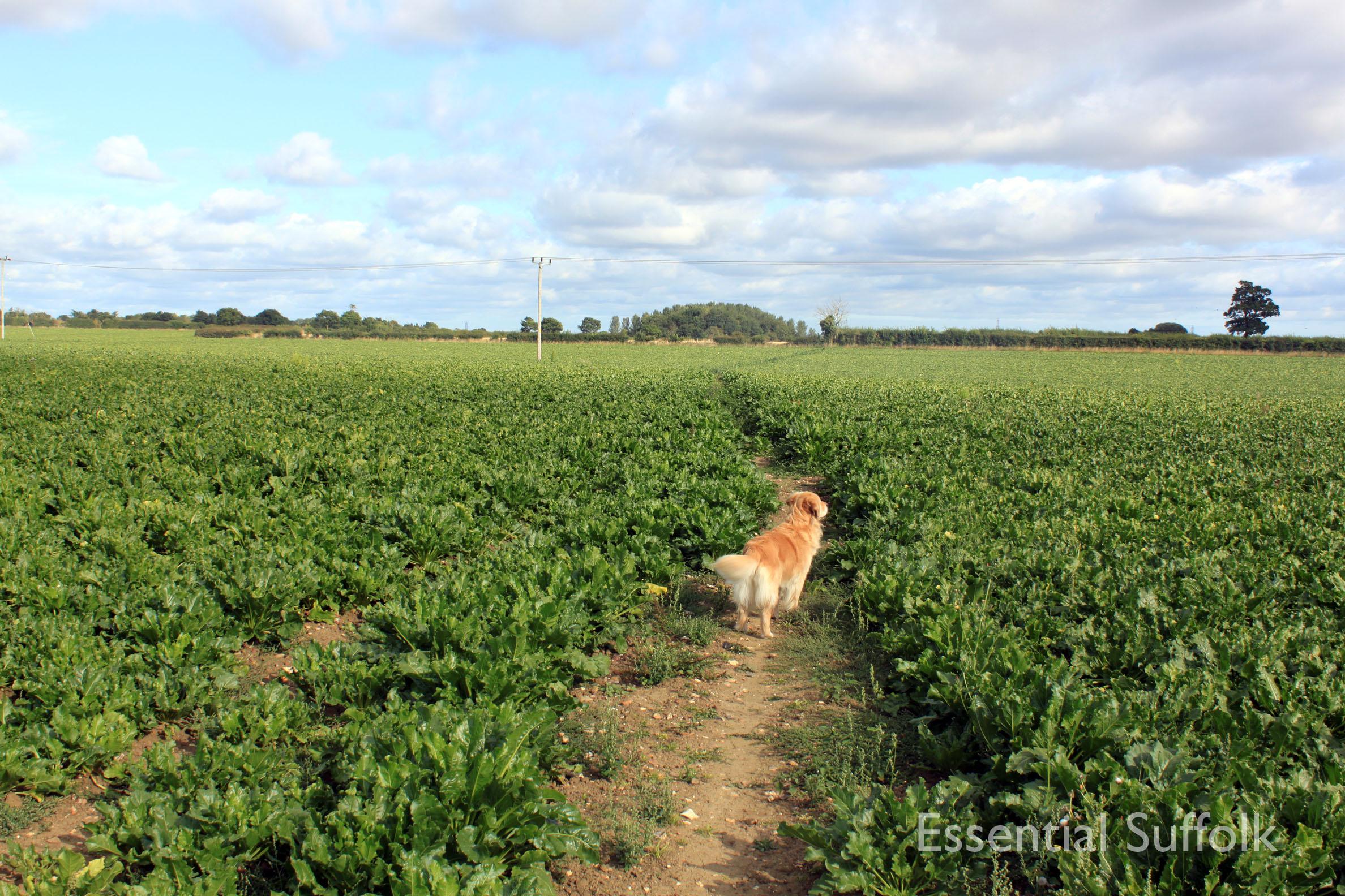 Shepherd and Dog 012.jpg