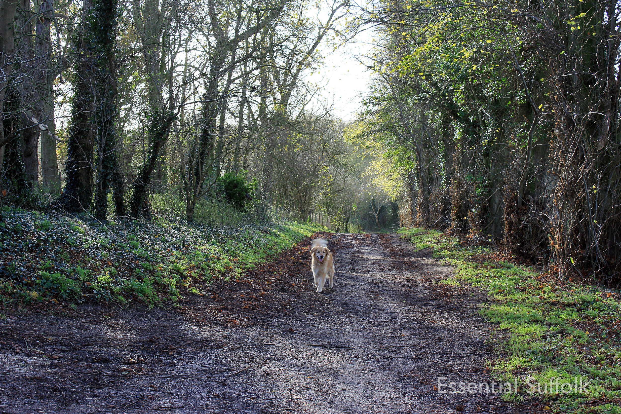 Brandeston Dog Walk 002.jpg