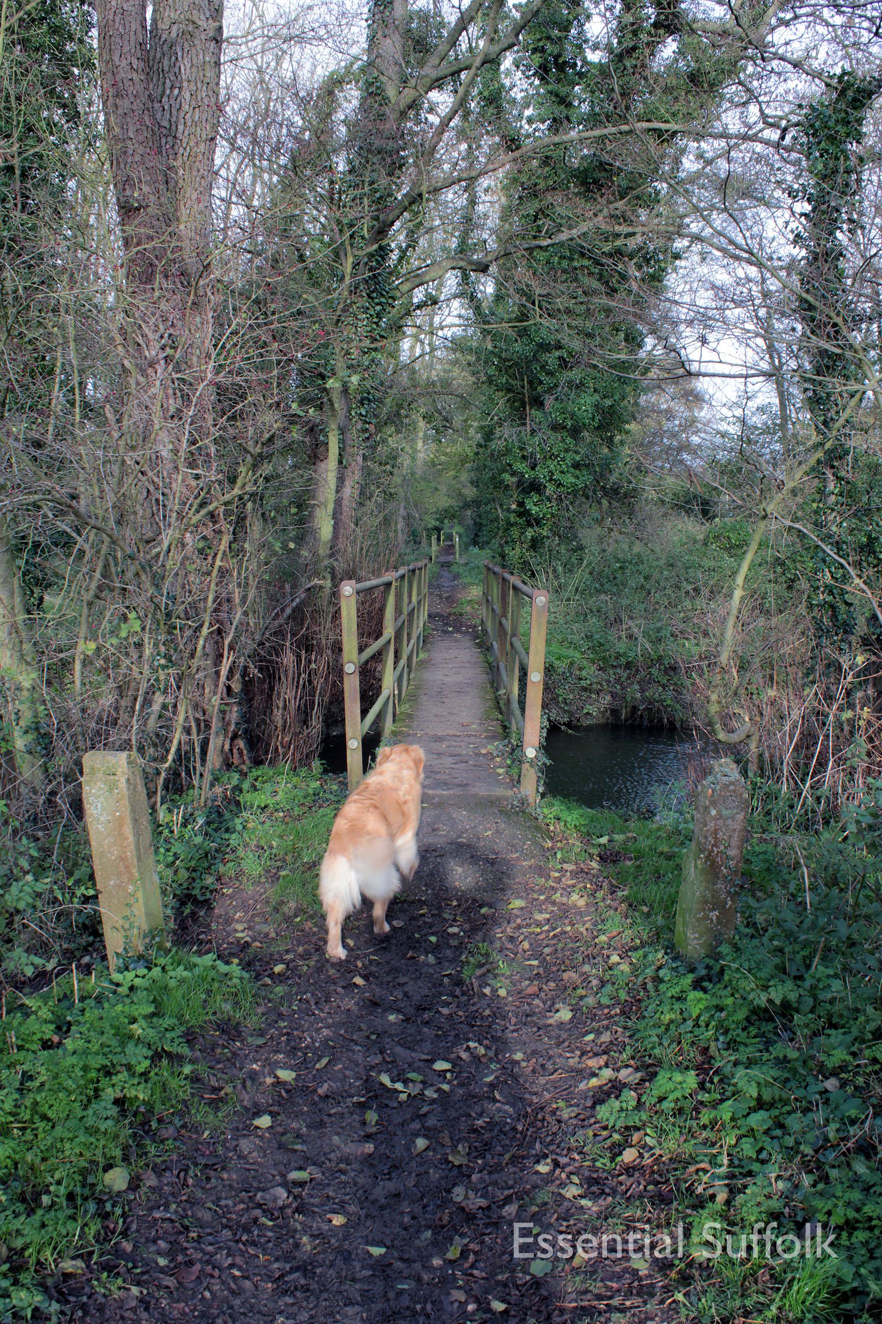 Brandeston Dog Walk 011.jpg