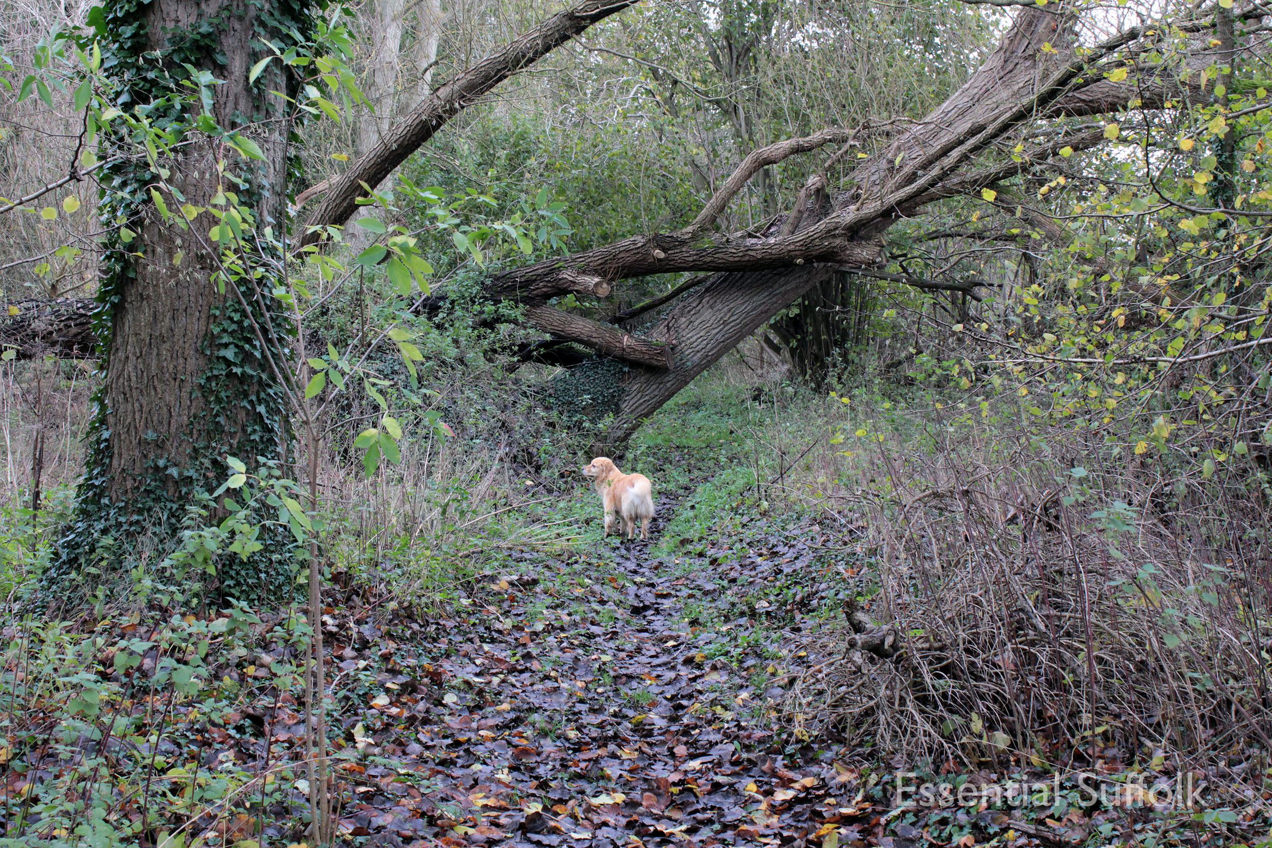Brandeston Dog Walk 018.jpg