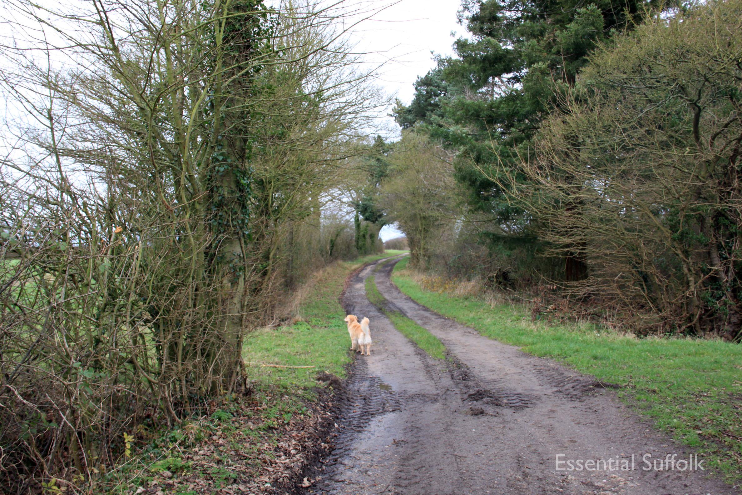 Hasketon Dog Walk 007.jpg