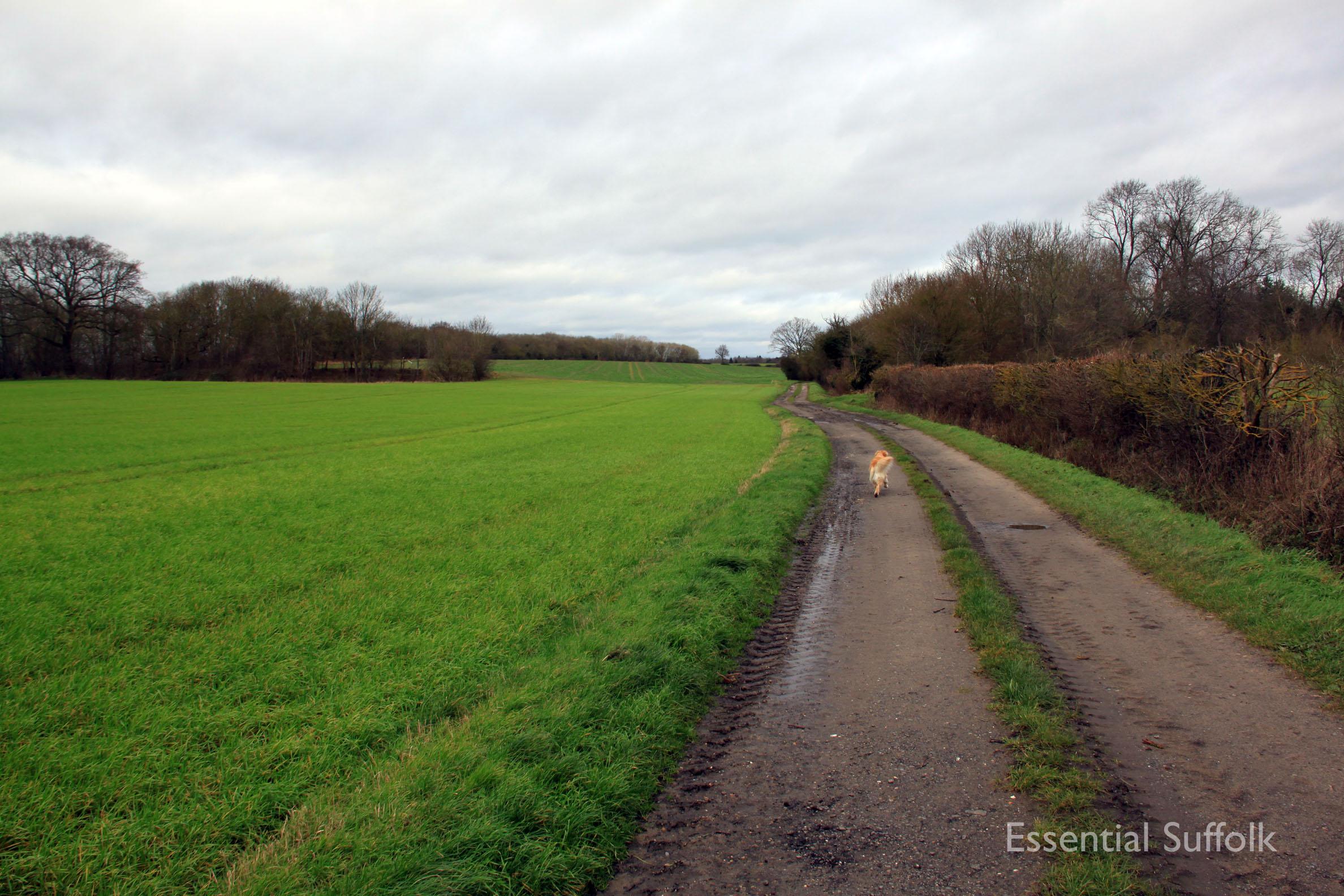 Hasketon Dog Walk 006.jpg