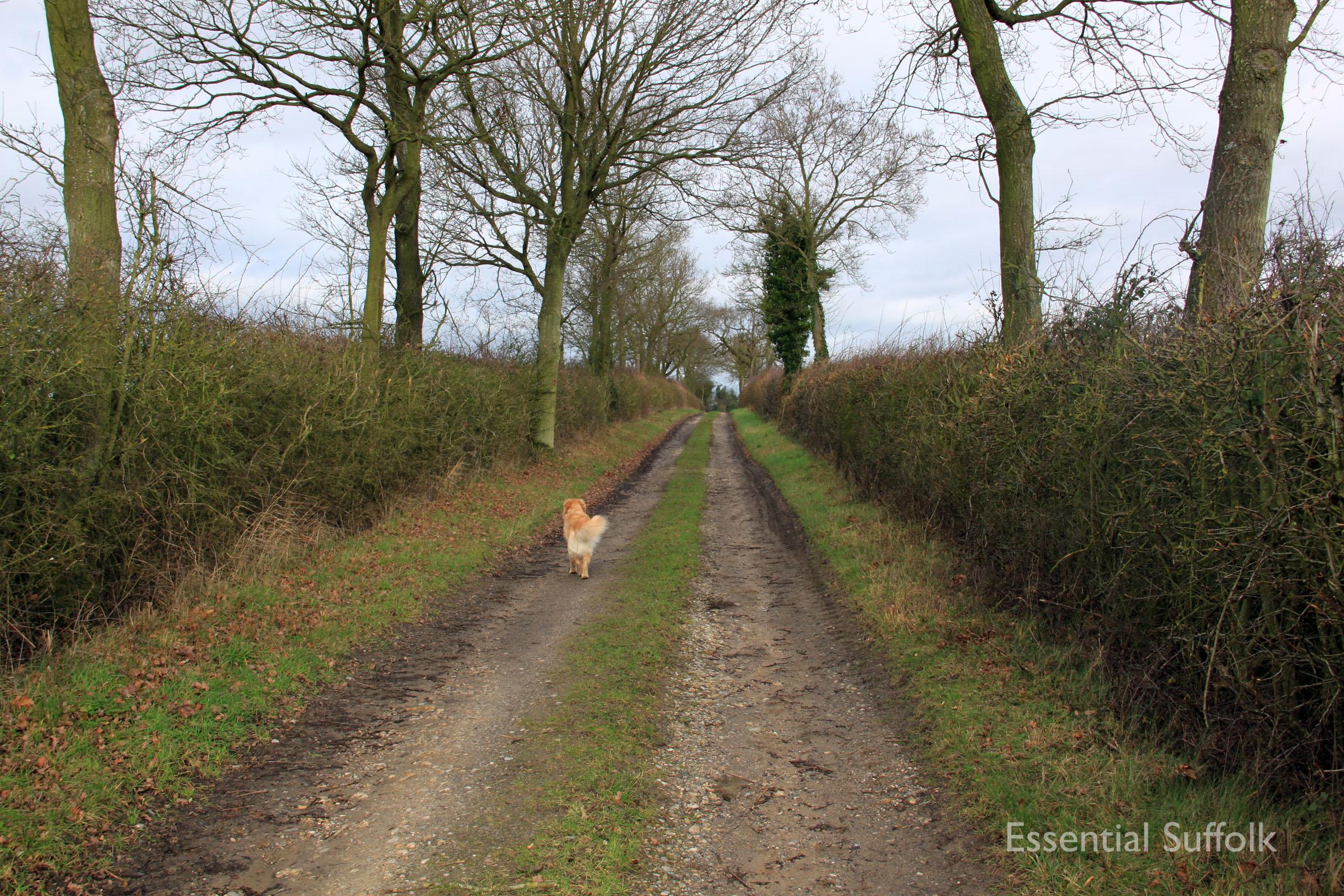 Hasketon Dog Walk 008.jpg