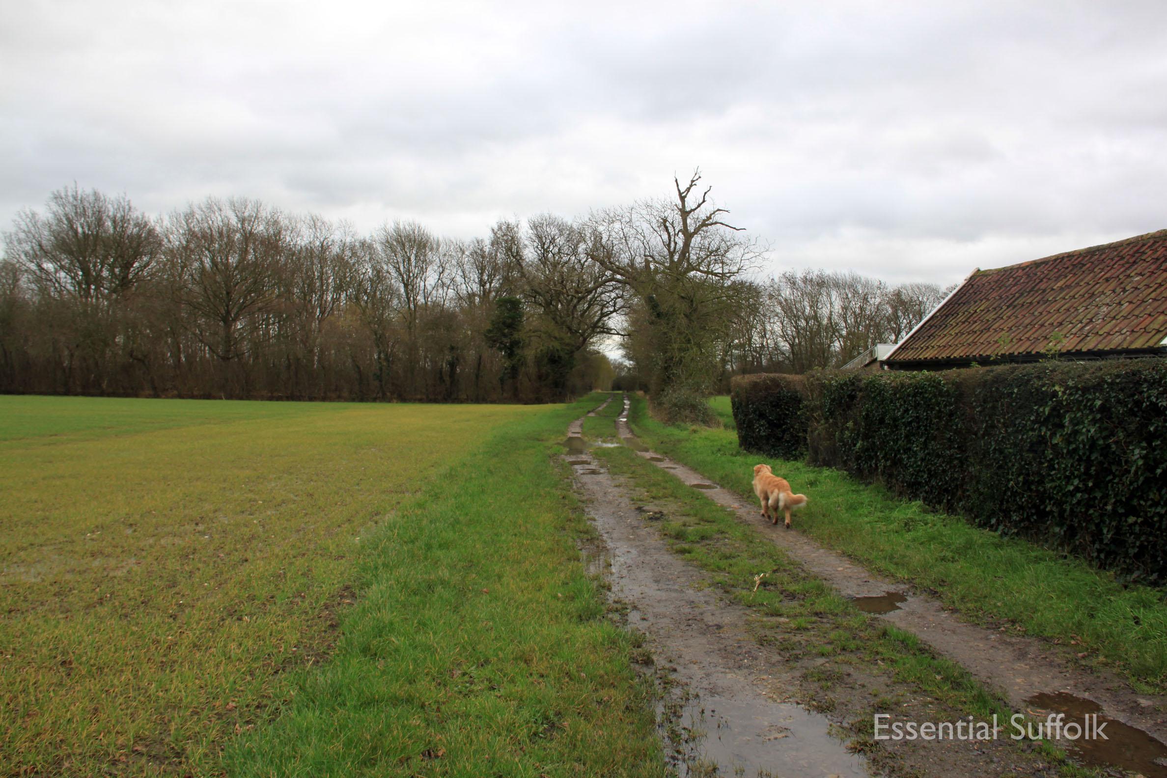 Hasketon Dog Walk 011.jpg