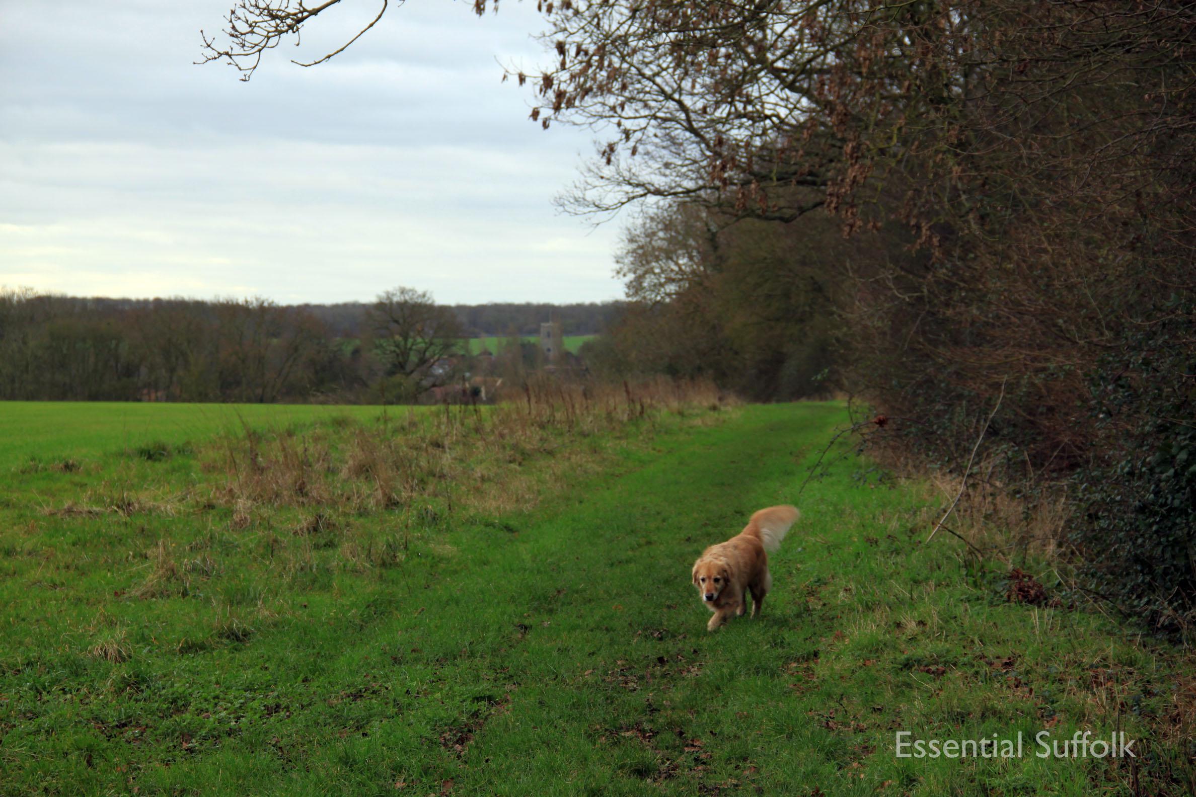 Hasketon Dog Walk 012.jpg