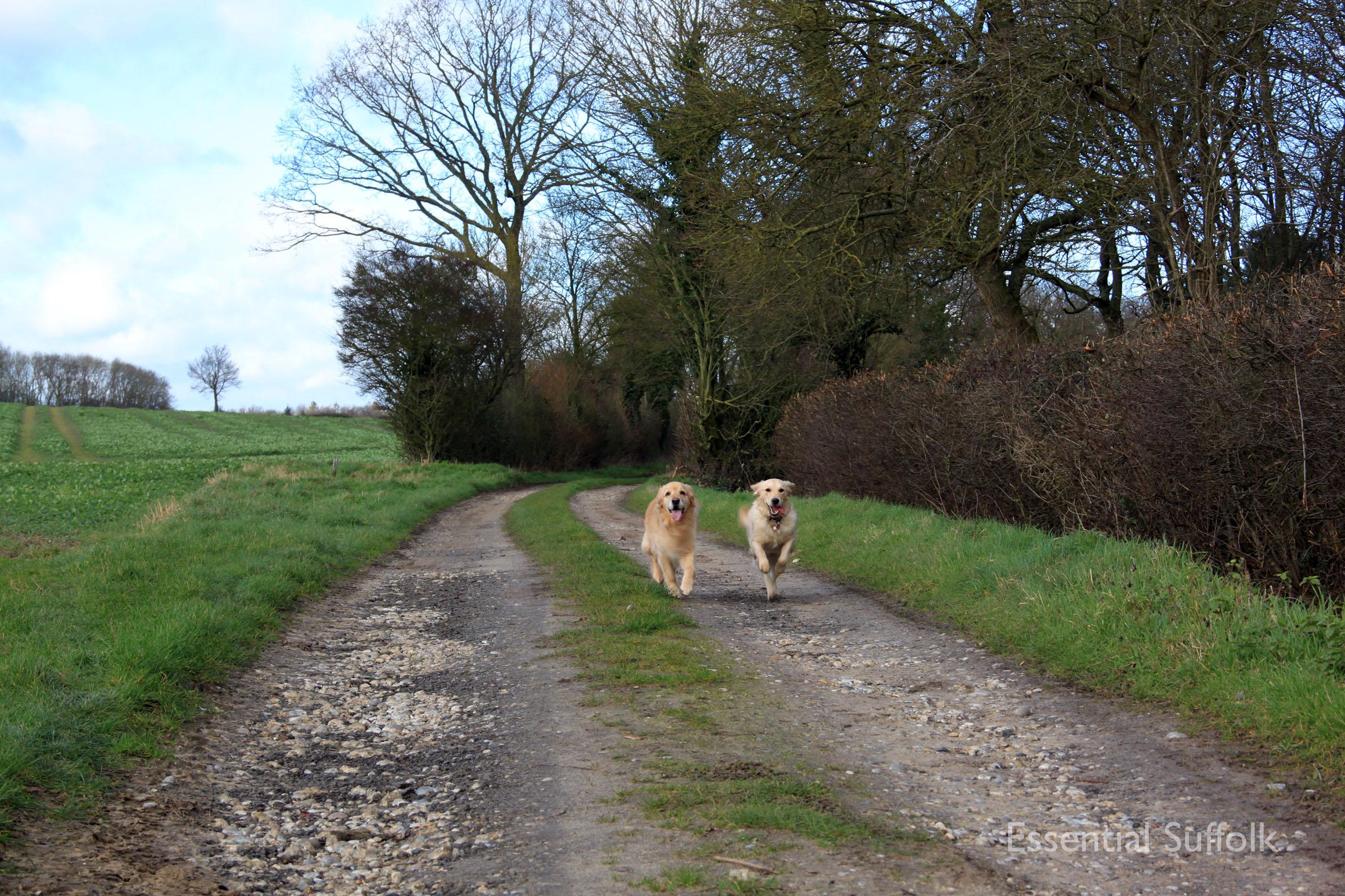 Hasketon Dog Walk 015.jpg