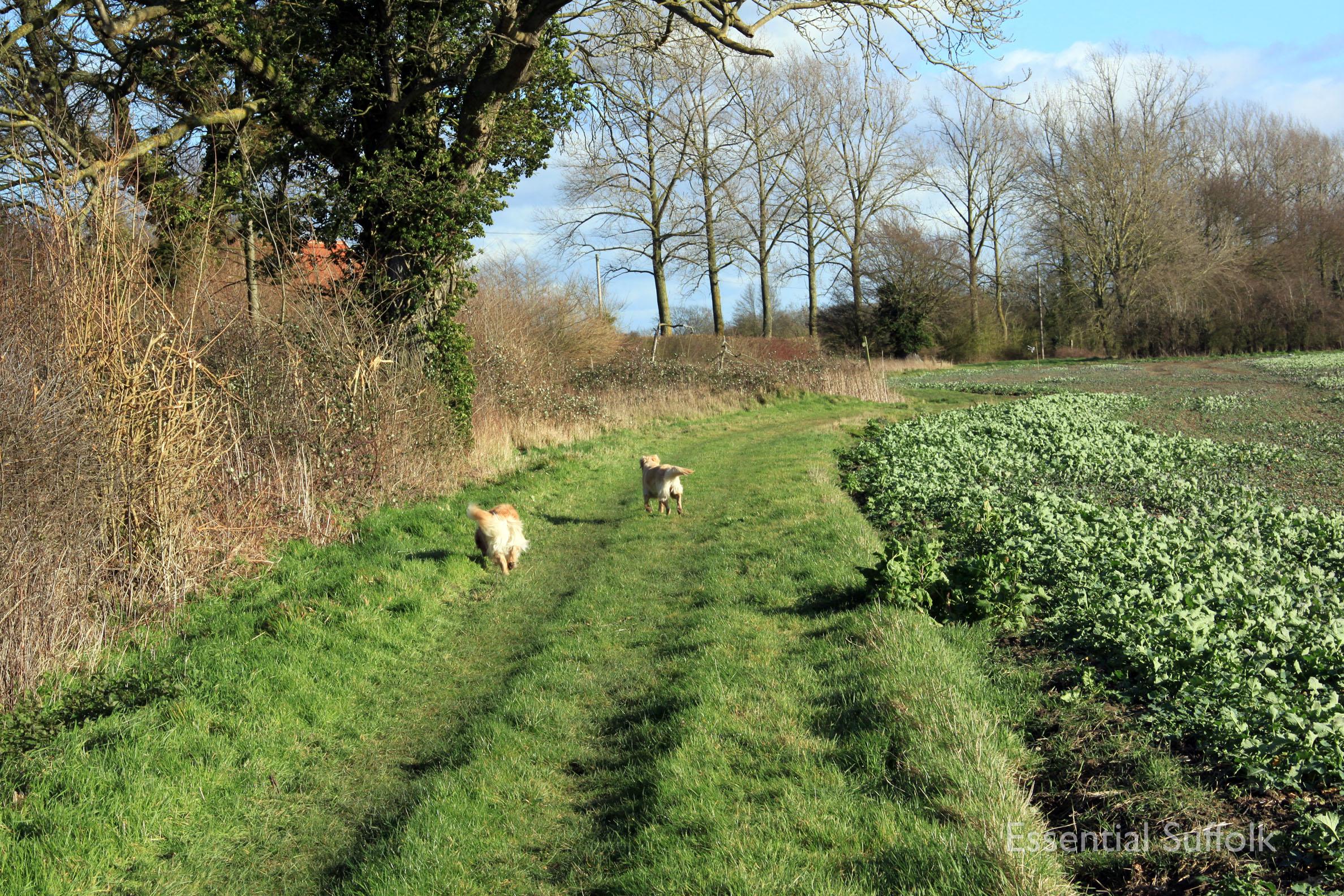 Hasketon Dog Walk 018.jpg