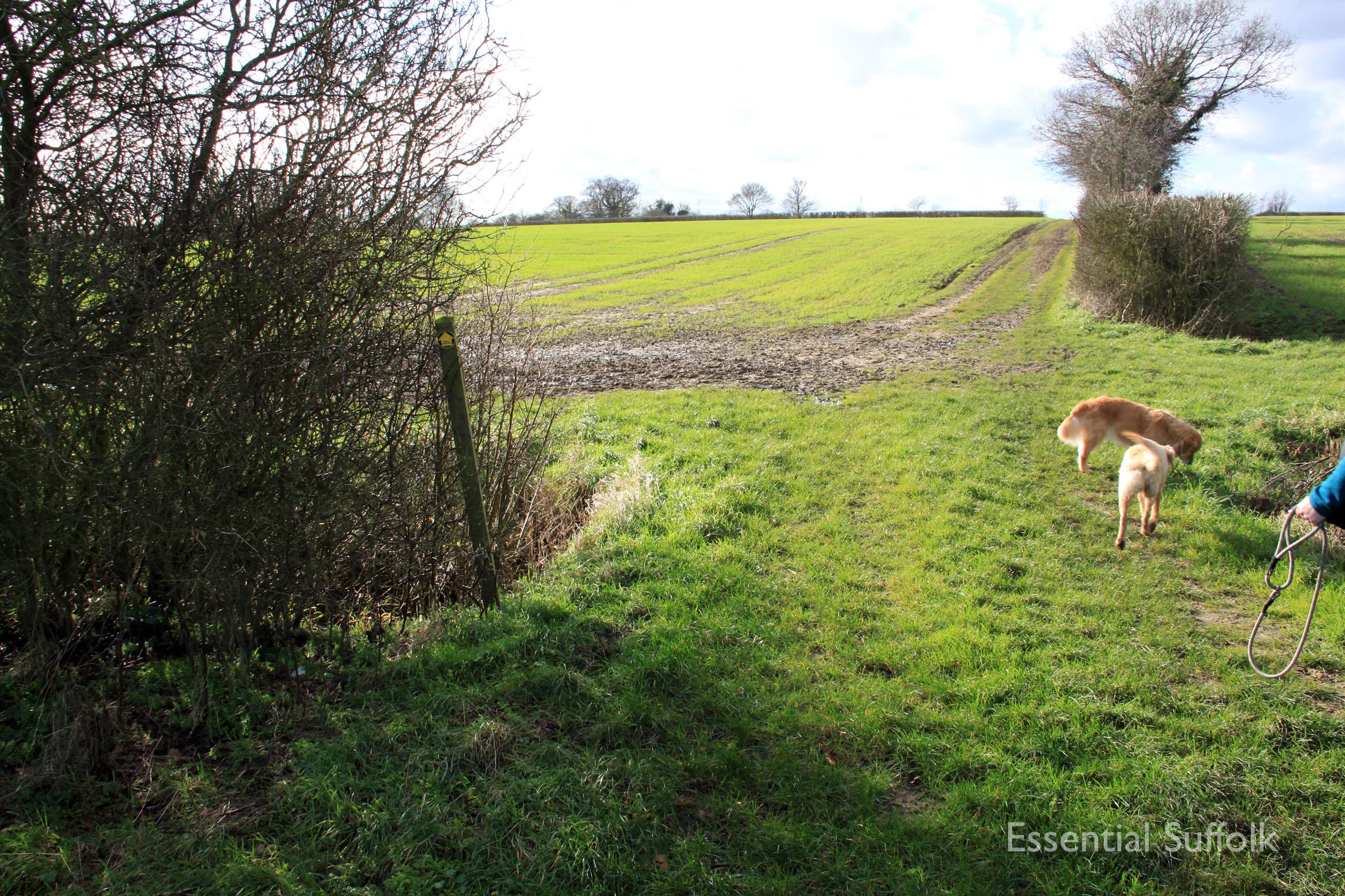 Hasketon Dog Walk 020.jpg