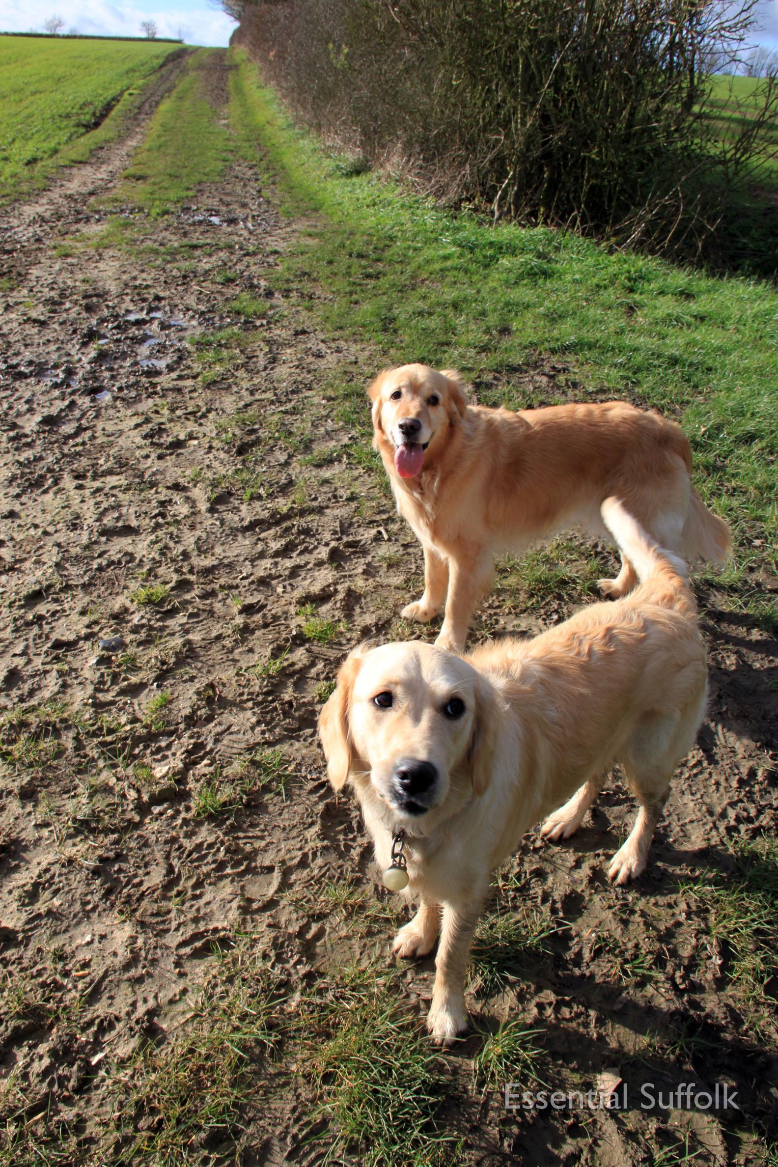 Hasketon Dog Walk 021.jpg