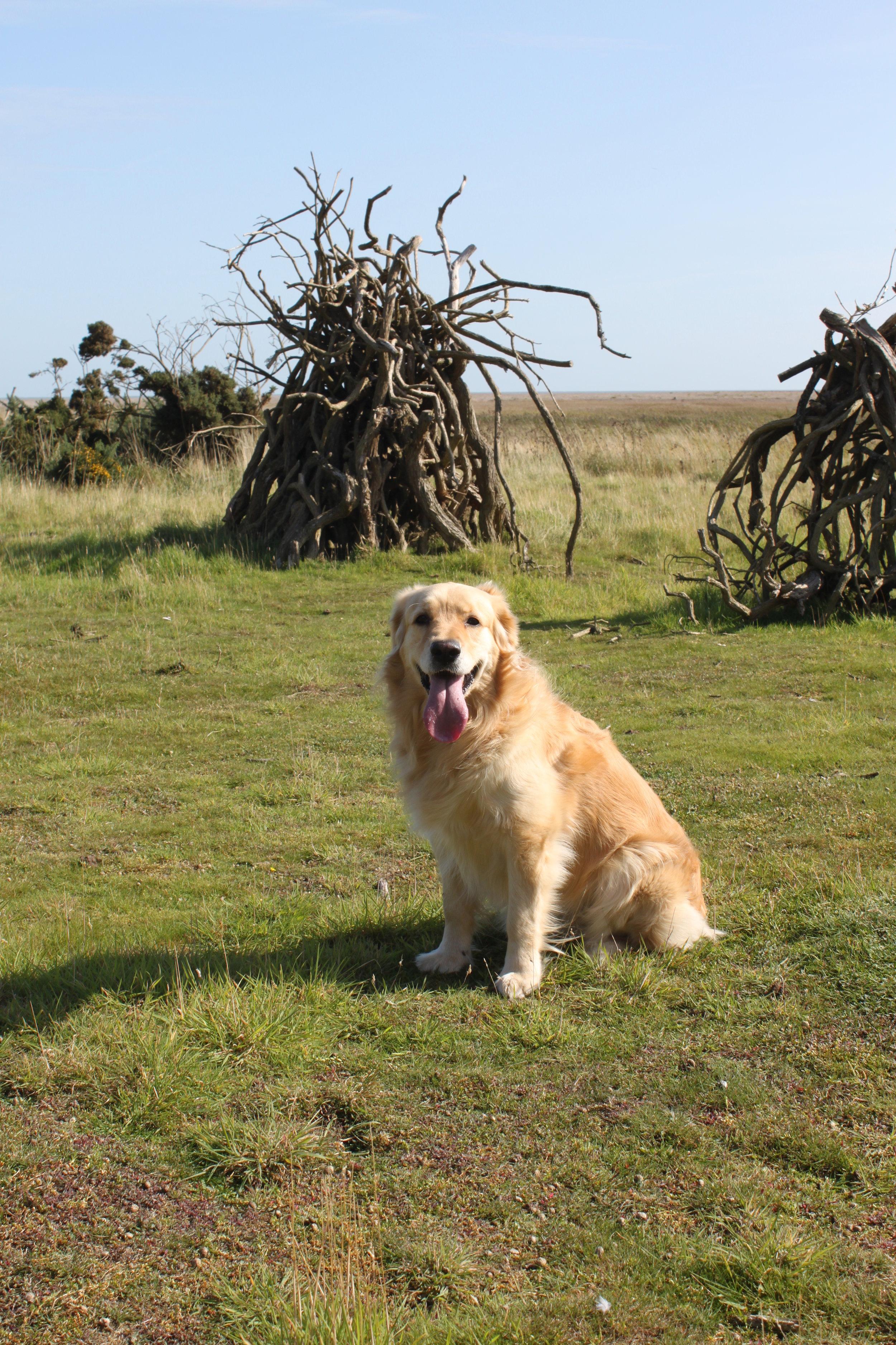 Dunwich dog walk 2 200.JPG