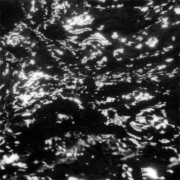 grouper_dream_loss.jpg