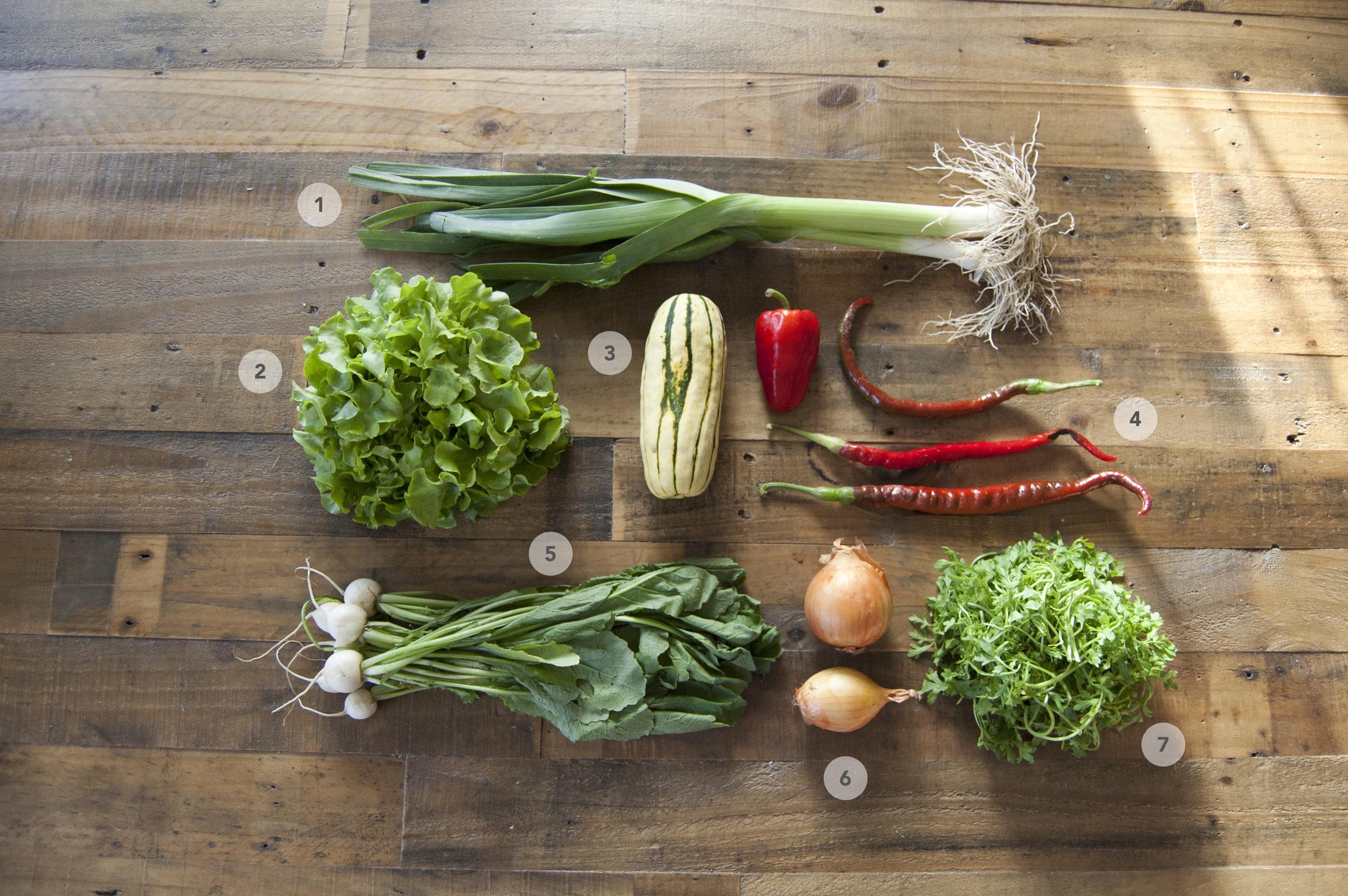 1.  Leeks |2. Panisse Lettuce  | 3. Delicata Squash  | 4. Mixed Hot Peppers | 5.  Hakurei Turnips | 6.  Yellow Onions | 7. Cressida Cress