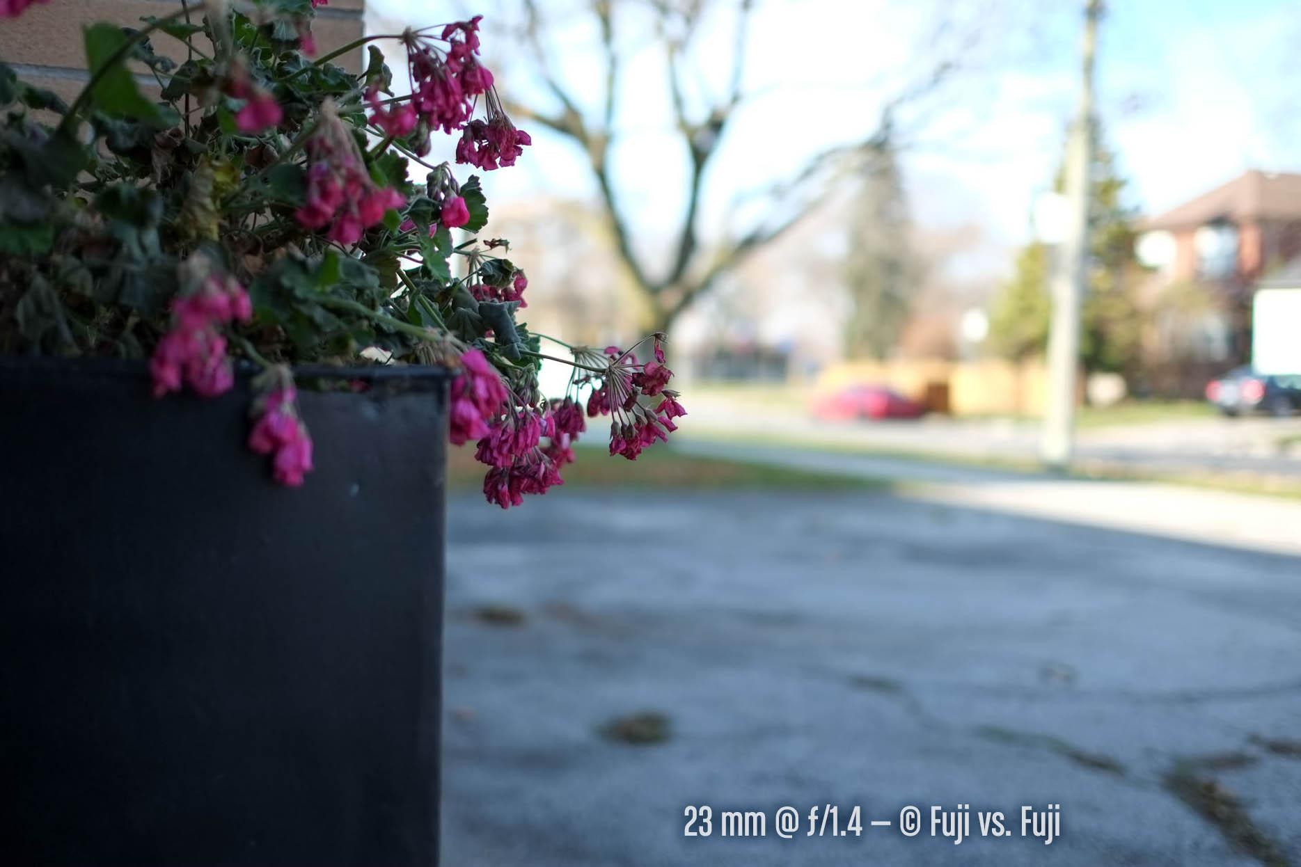 outdoorbokeh-23@1pt4.jpg