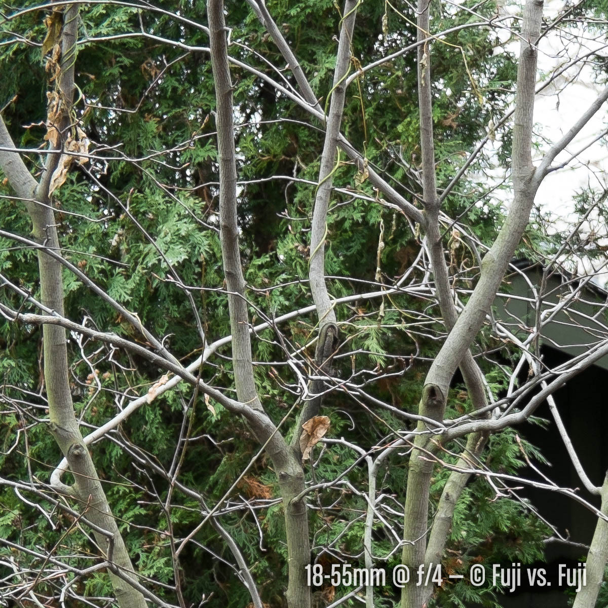 fujivsfuji-sharpness-crop3-18-55@4.jpg