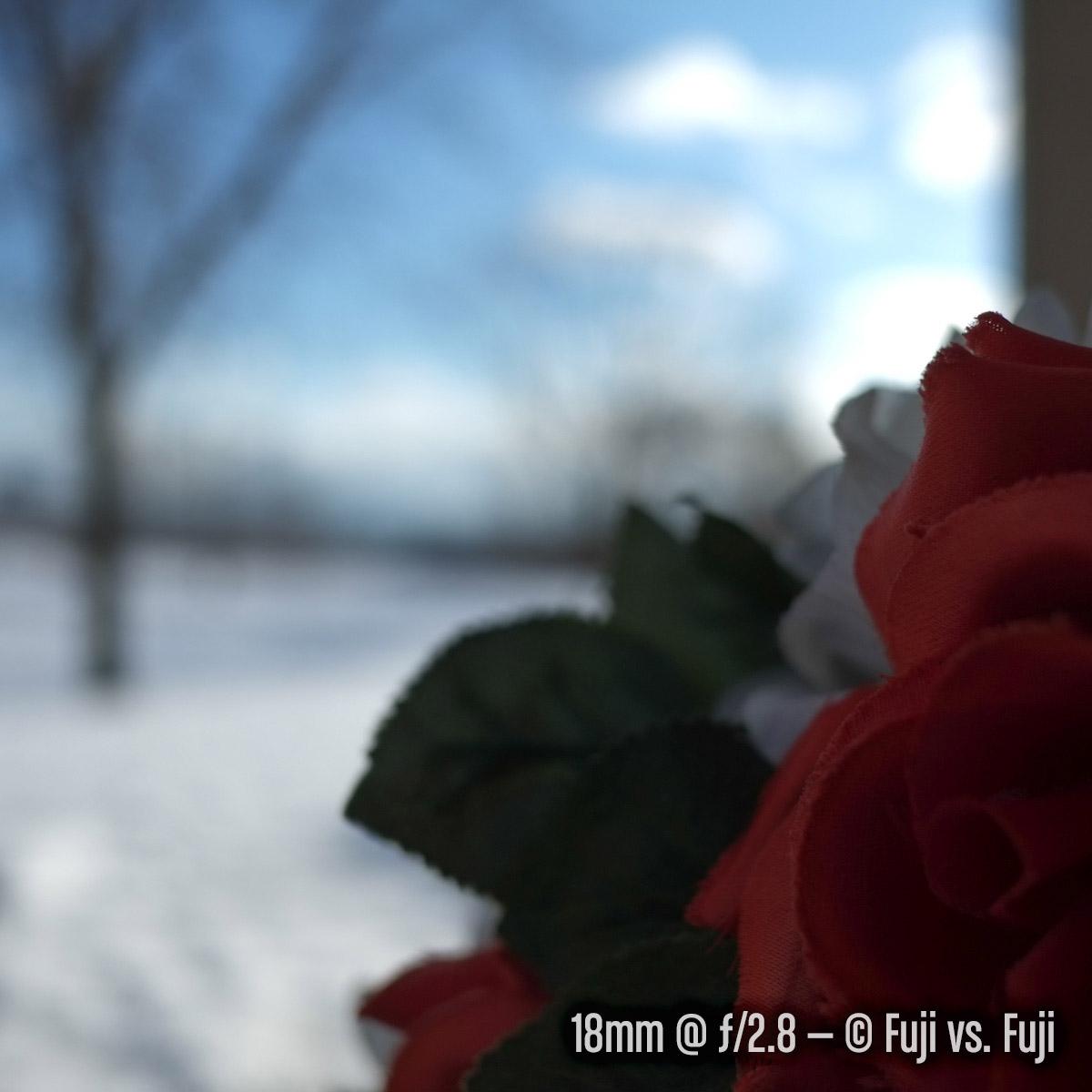 LandscapeBokeh-18@2pt8.jpg
