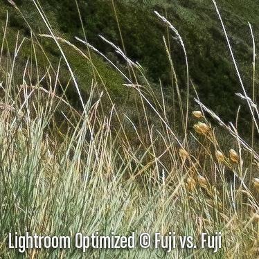 LightroomO6.jpg
