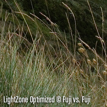 LightZoneO6.jpg