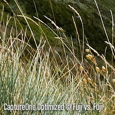 CaptureOneO6.jpg