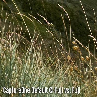 CaptureOneD6.jpg
