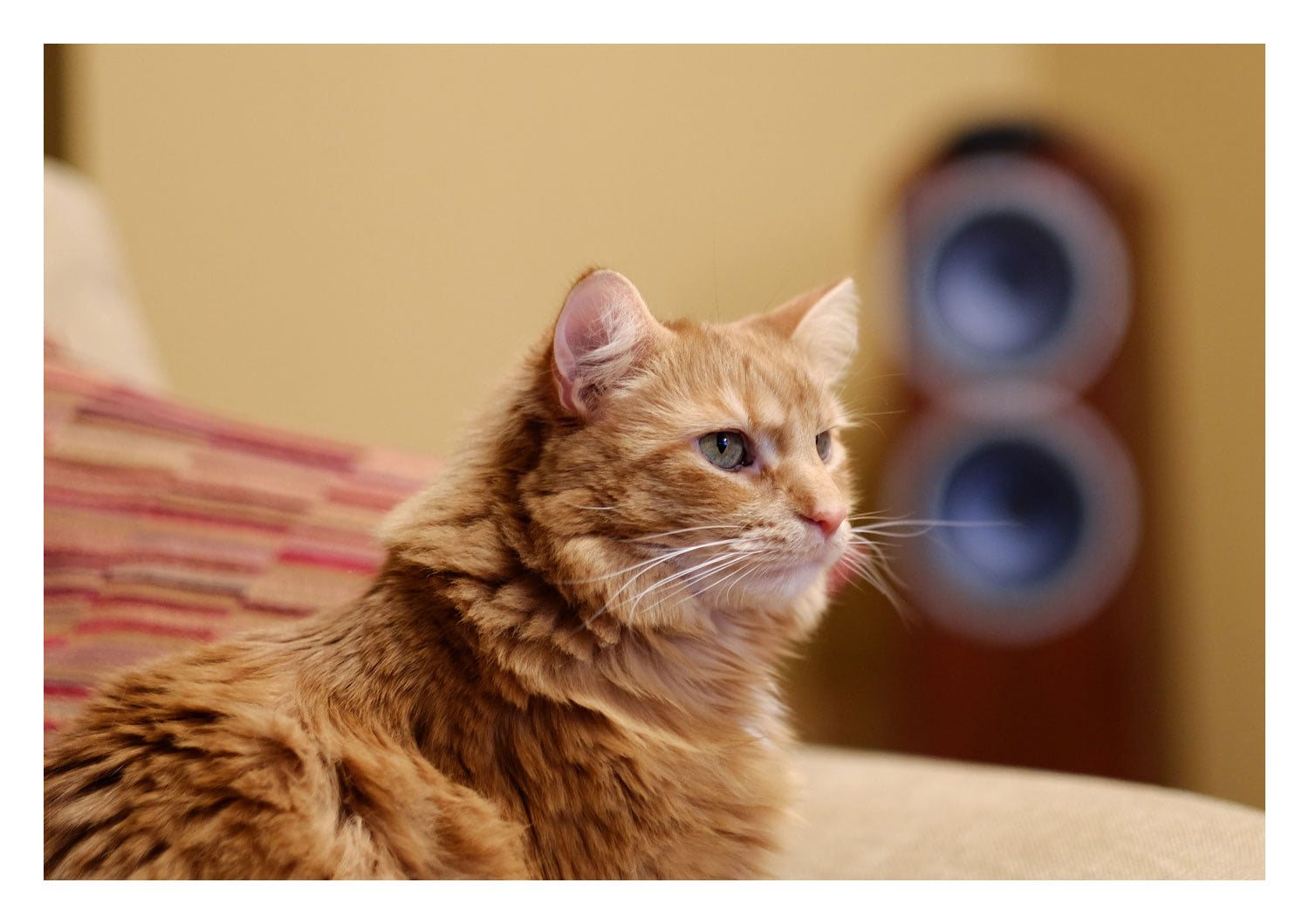 Not just A shameless cat photo, check out the bokeh on the speaker. It looks cool, but it's a distraction from the subject – F/1.2