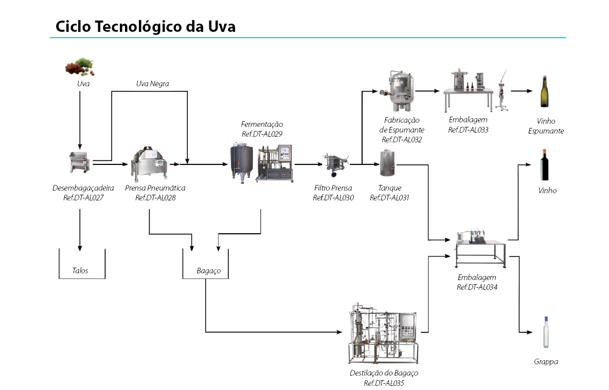 ciclo-uva.png