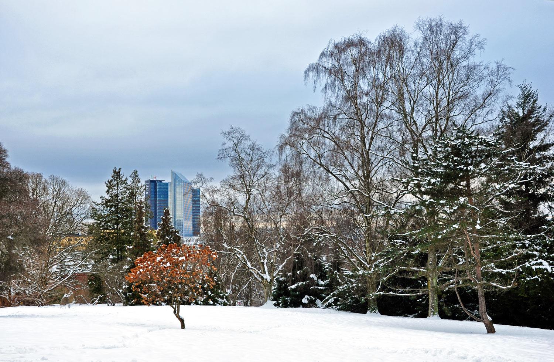 Oslo-Botanisk-hage-1039243042.jpg